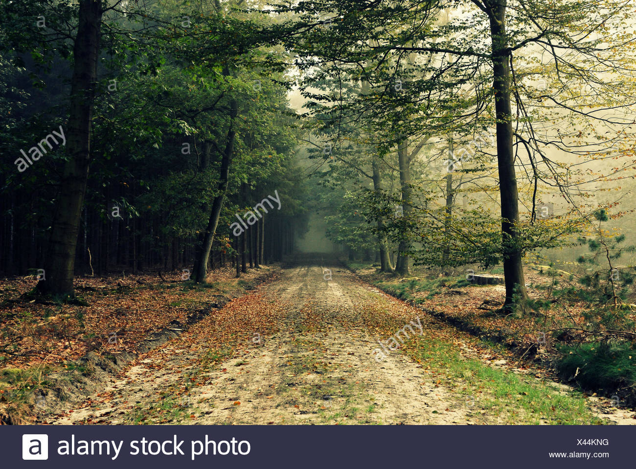 Netherlands, Odoorn, Dirt road in forest - Stock Image