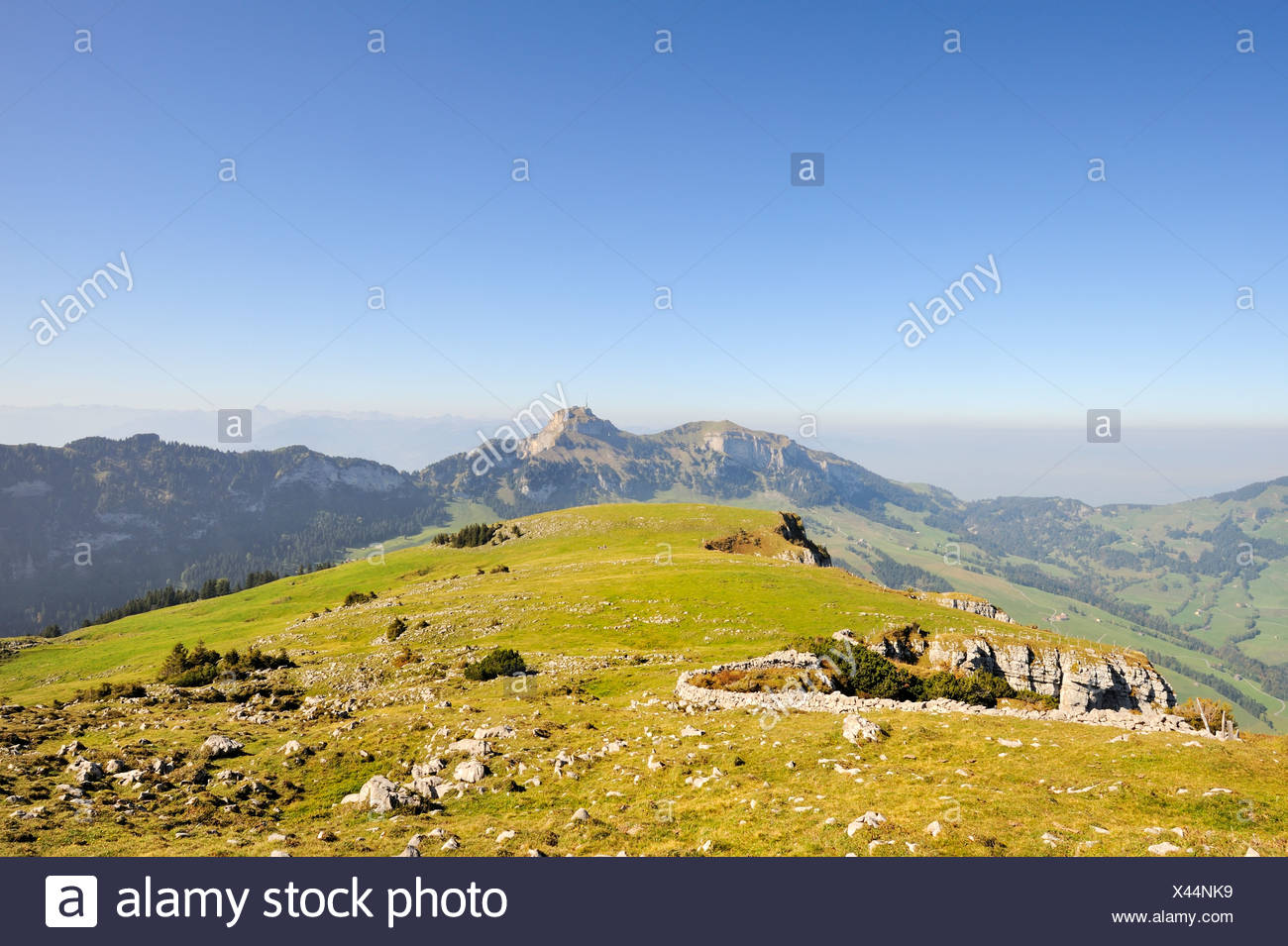 Pasture on the escarpment on the high plateau Alp Sigel, 1730 m, in the Appenzell Alps with a view towards Hohen Kasten Mountain - Stock Image