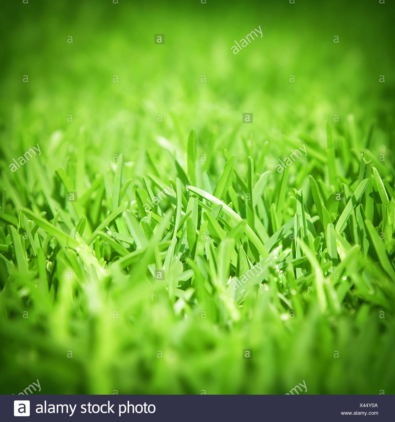 Spring Green Grass Background, Fresh Natural Textured