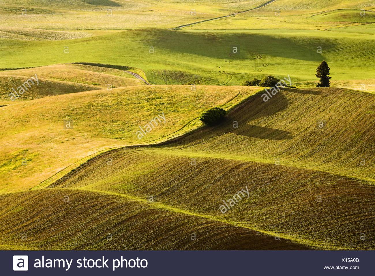 Fields, Washington, USA Stock Photo