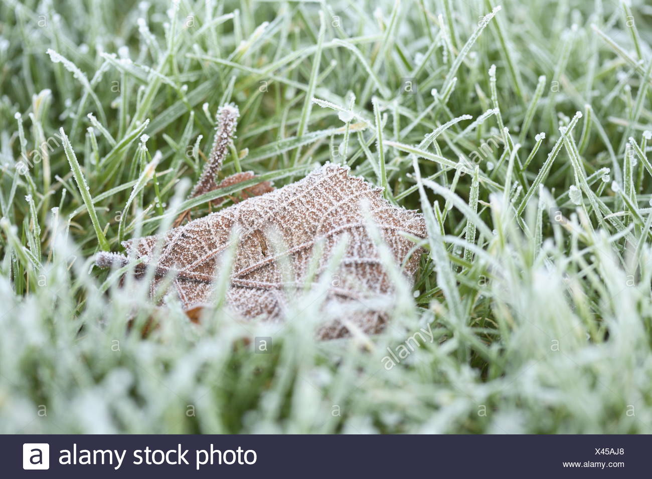 Frost-covered lawn Stock Photo