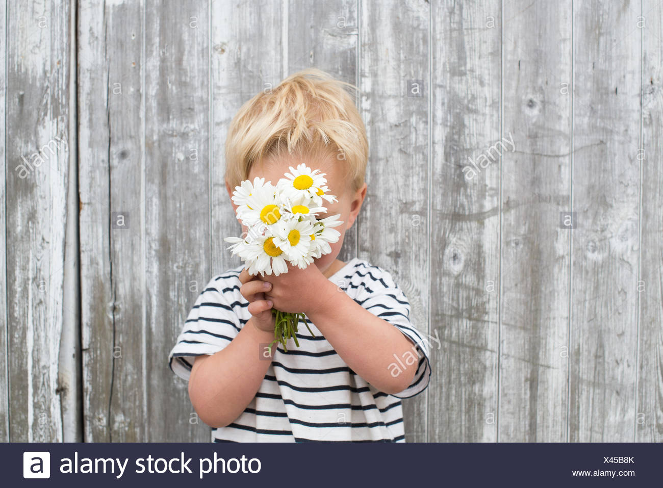 Boy hiding behind daisies - Stock Image