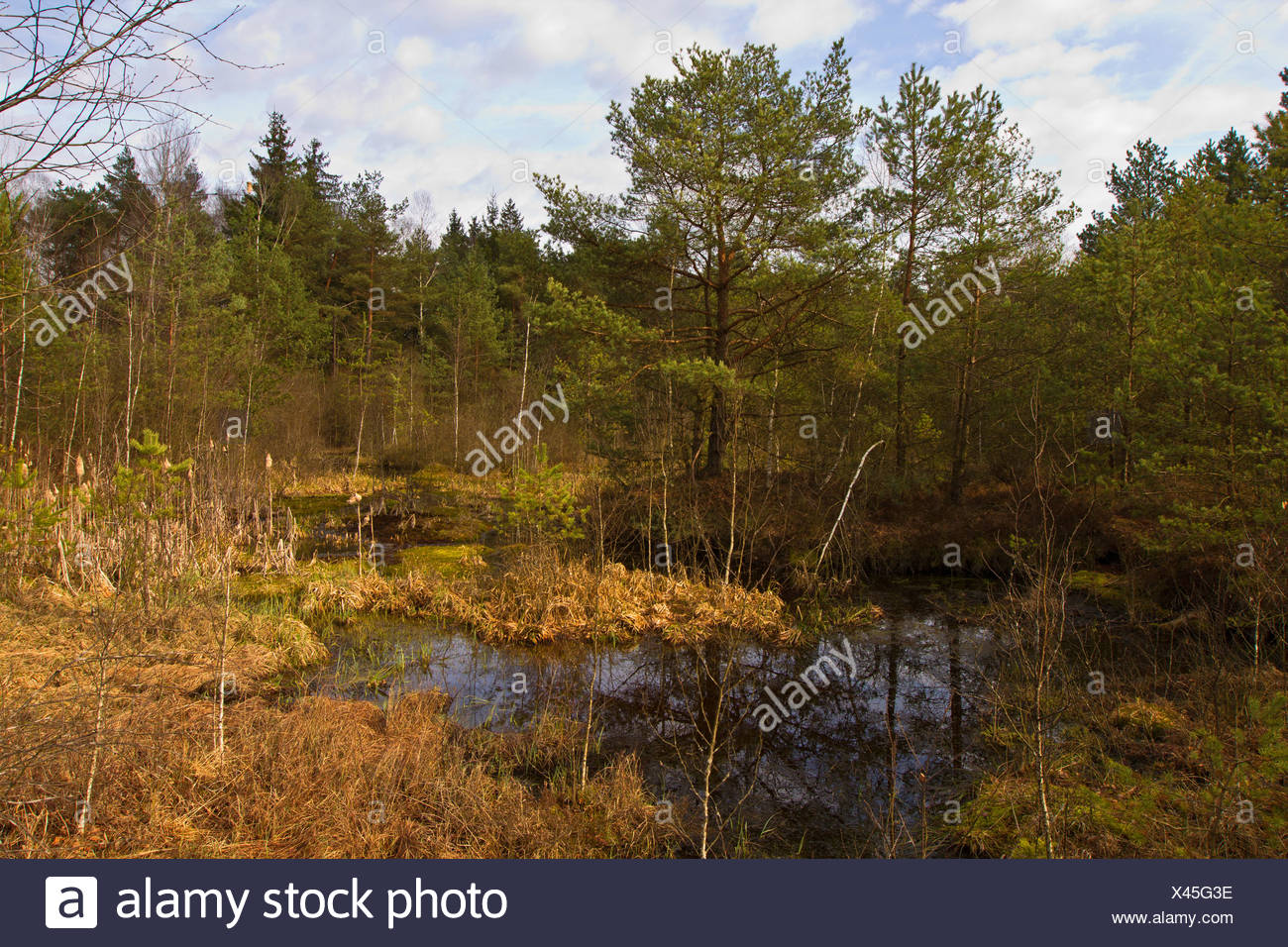 low moor with moor pond, Germany, Bavaria - Stock Image