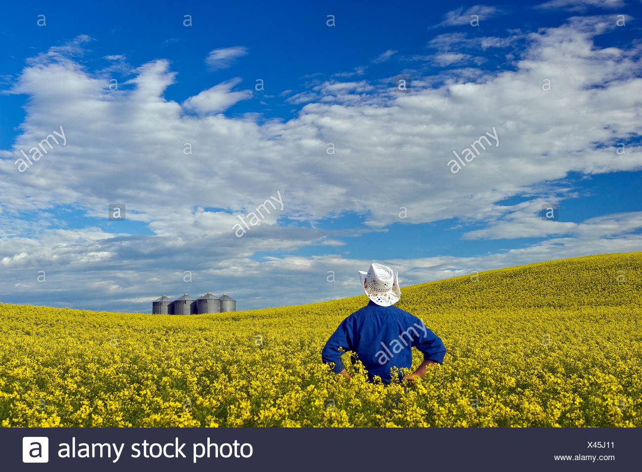 a man looks out over a field of bloom stage canola with grain bins in the background, Tiger Hills, Manitoba, Canada - Stock Image
