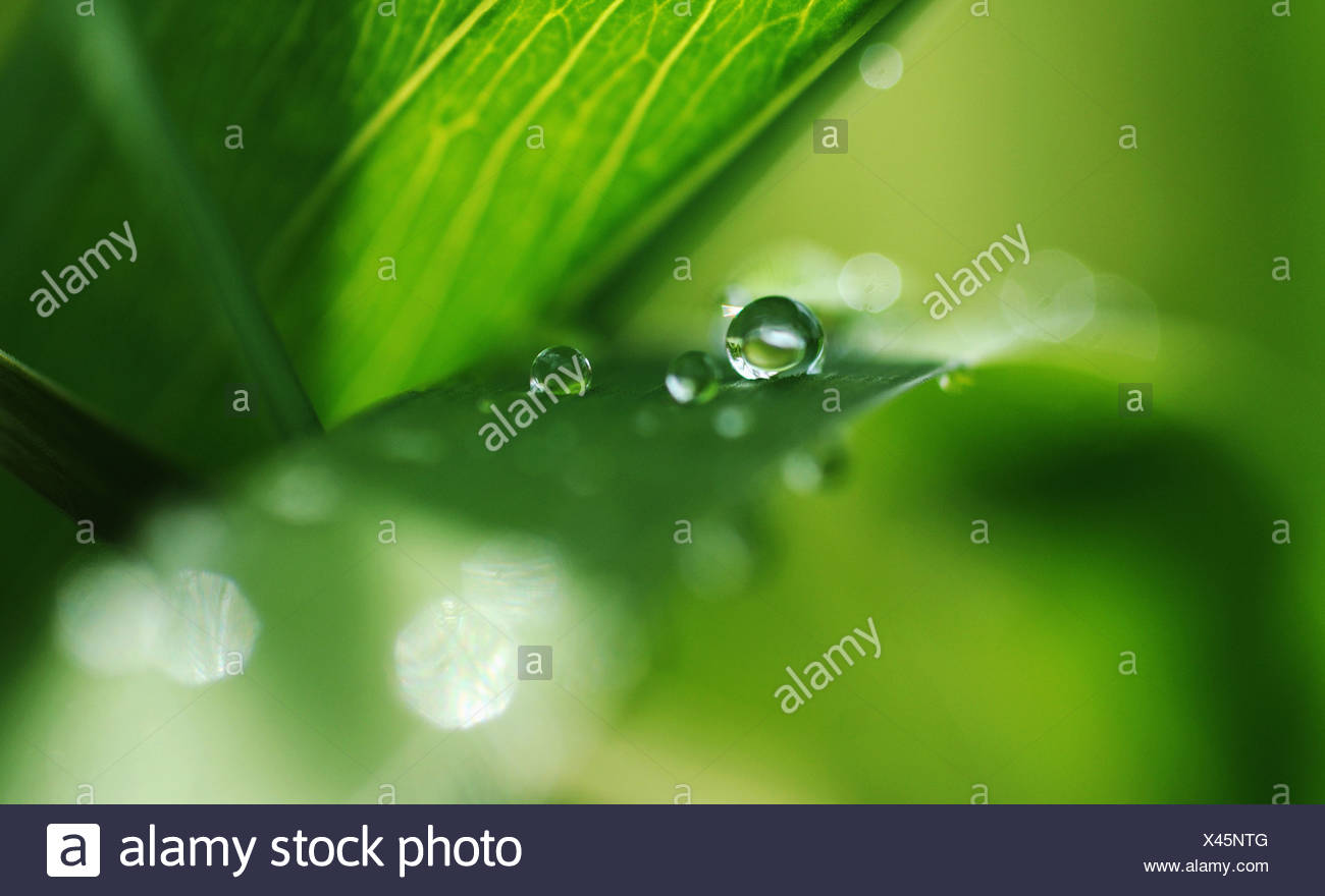 Drop - Stock Image