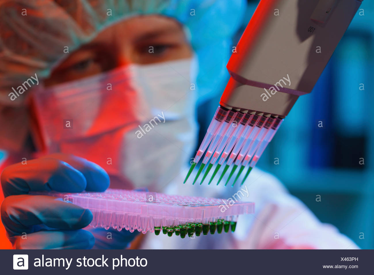 MODEL RELEASED. Lab assistant using multi pipette and multiwell. - Stock Image