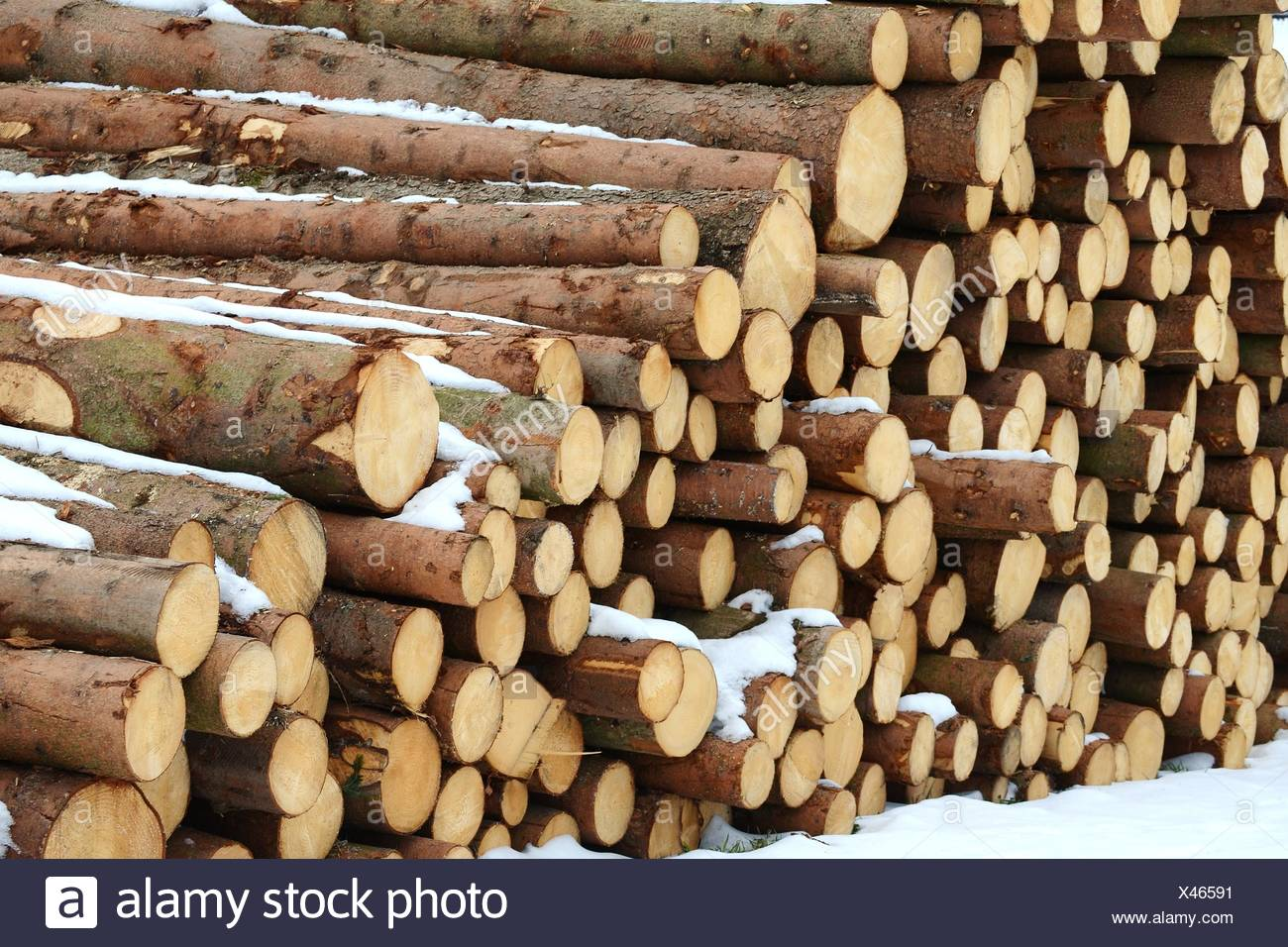 wood, firewood, softwood, wood, energy, power, electricity, electric power, - Stock Image