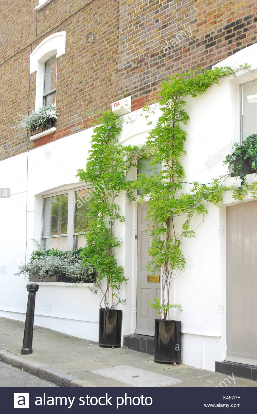 A grey front doon a white painted house with tall climbing ... House With Large Plants on large blooming plants, large exotic plants, large jungle plants, large foliage plants, indoor plants, large herb plants, large money plants, large blackberry plants, large perennial plants, large fake plants, large sea plants, large drought tolerant plants, large green plants, office plants, large dark plants, large water plants, hot tub plants, large grass plants, large floor plants, large outdoor plants,