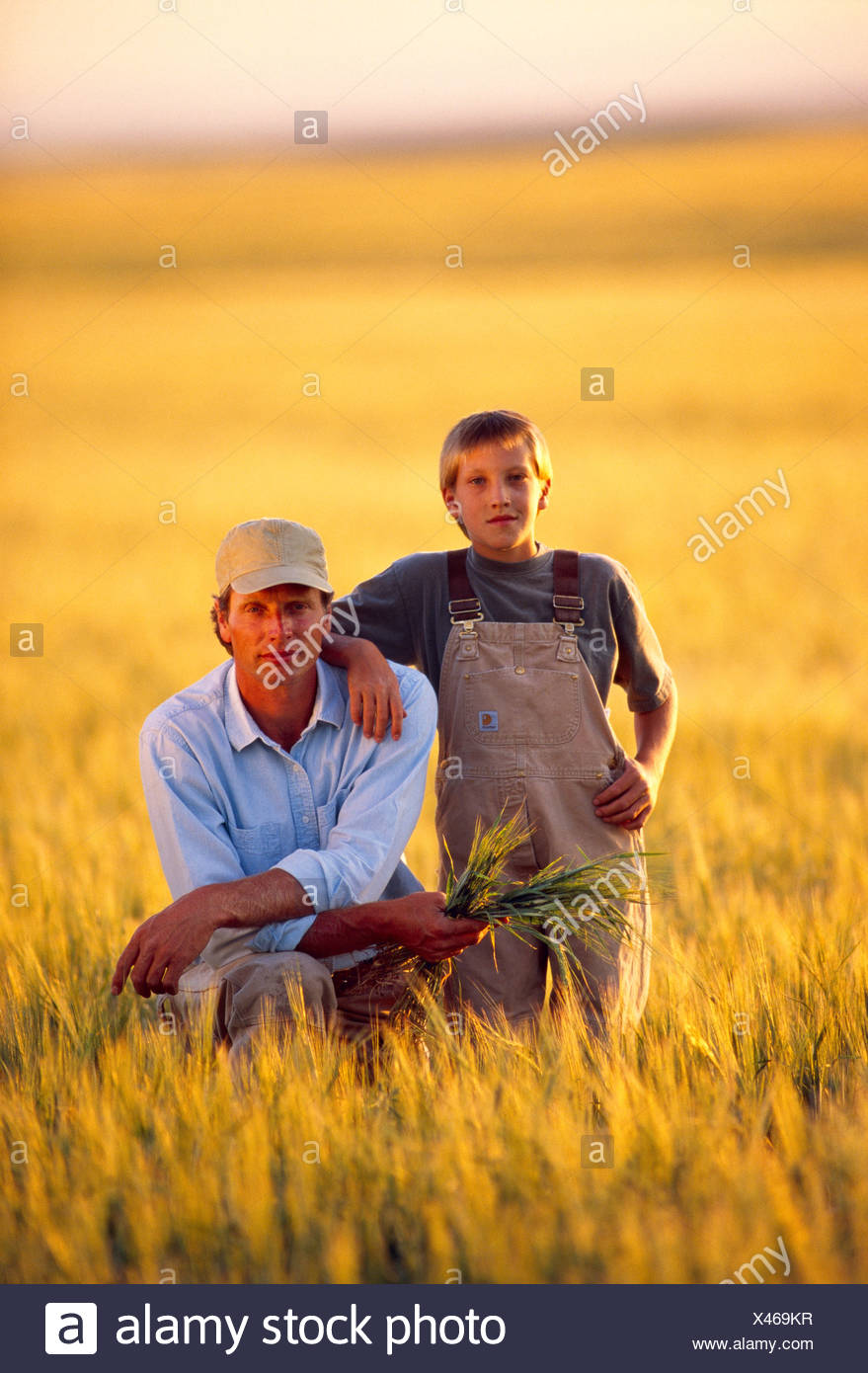 Agriculture - Farmer and his son in a field of maturing wheat / Central Montana, USA. - Stock Image