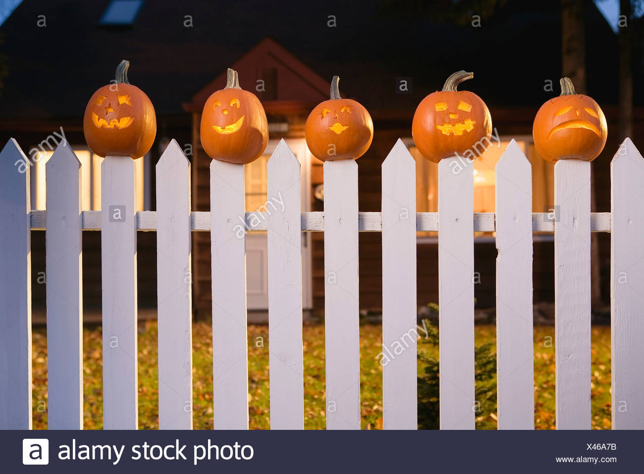Jack-O-Lantern Faces Stuck On Top Of White Picktet Fence With A House In Background At Twilight During Fall In Alaska. Stock Photo