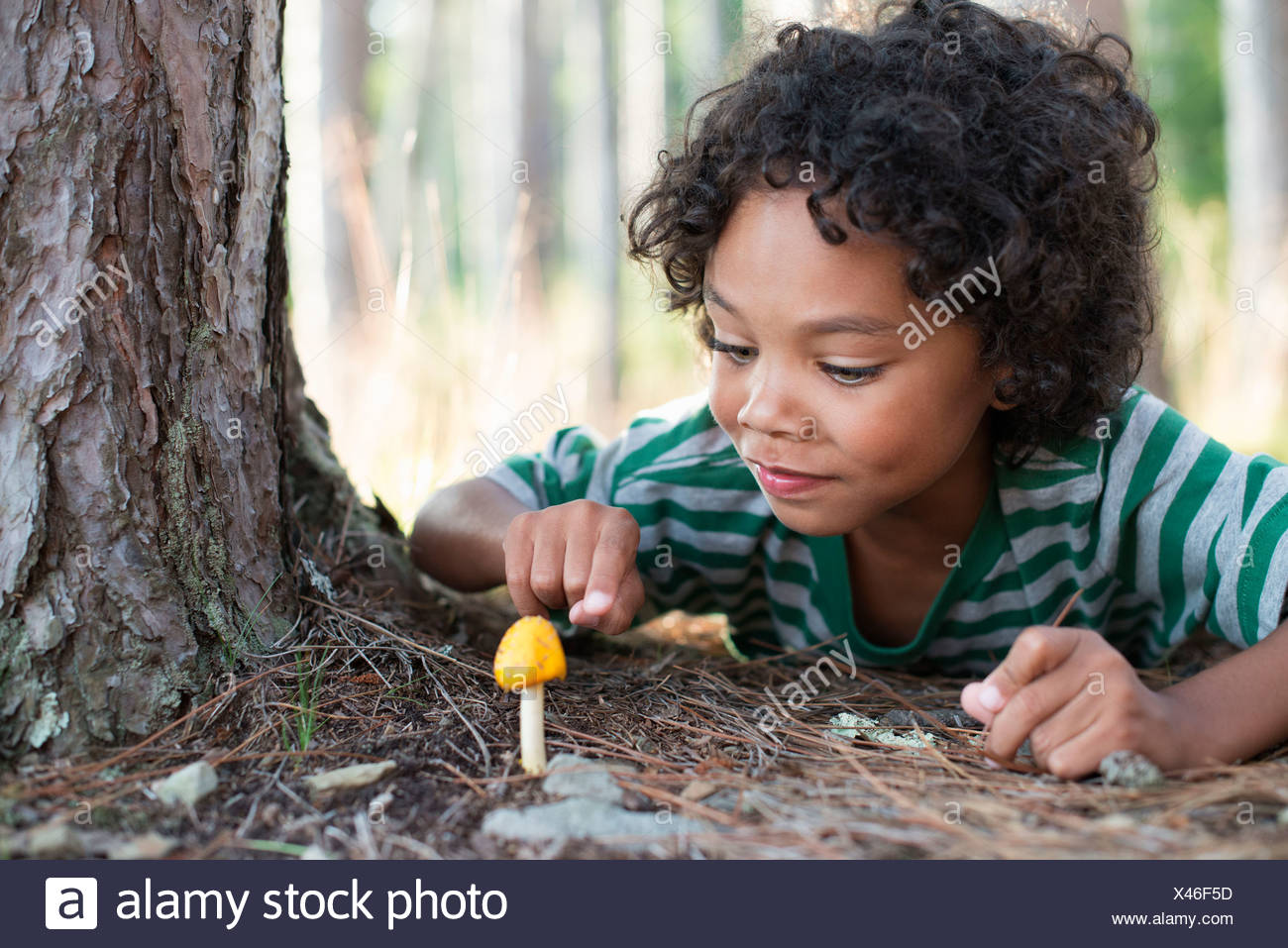 Trees on the shores of a lake. A child lying down inspecting a small yellow fungi mushroom. - Stock Image