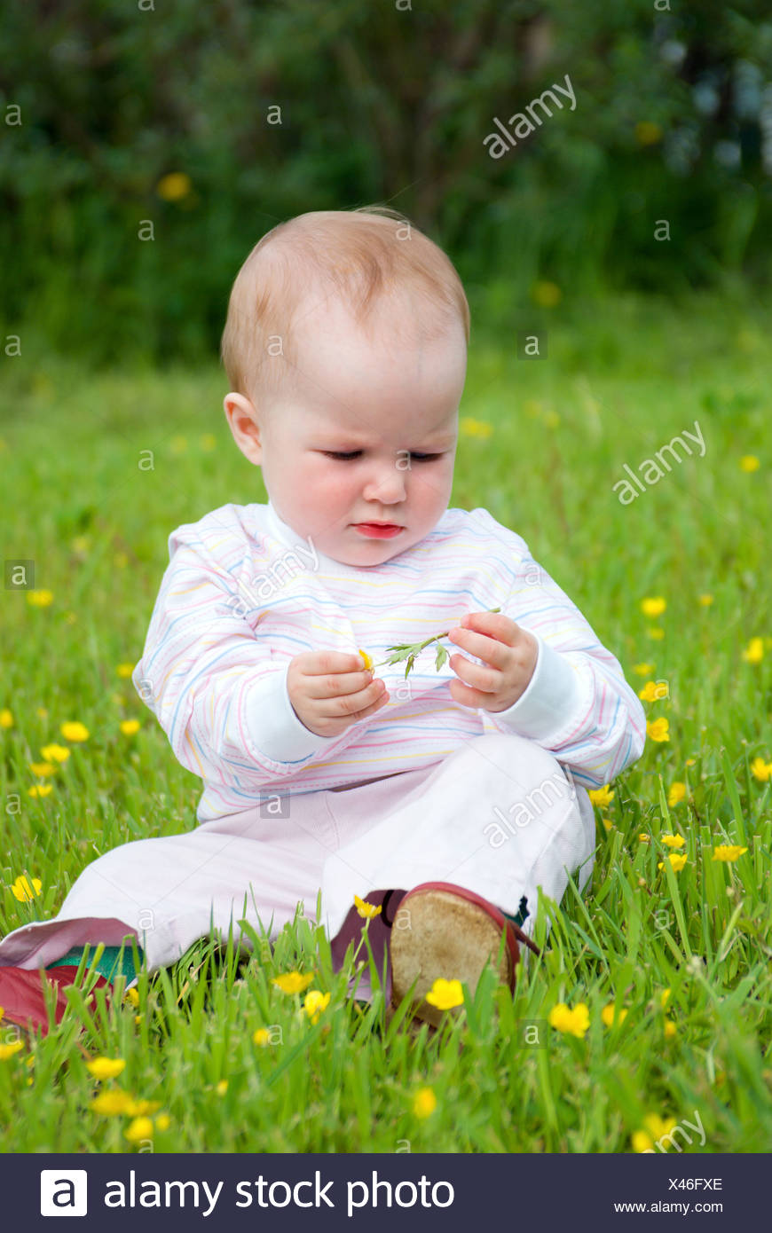 little one on meadow considers flower - Stock Image