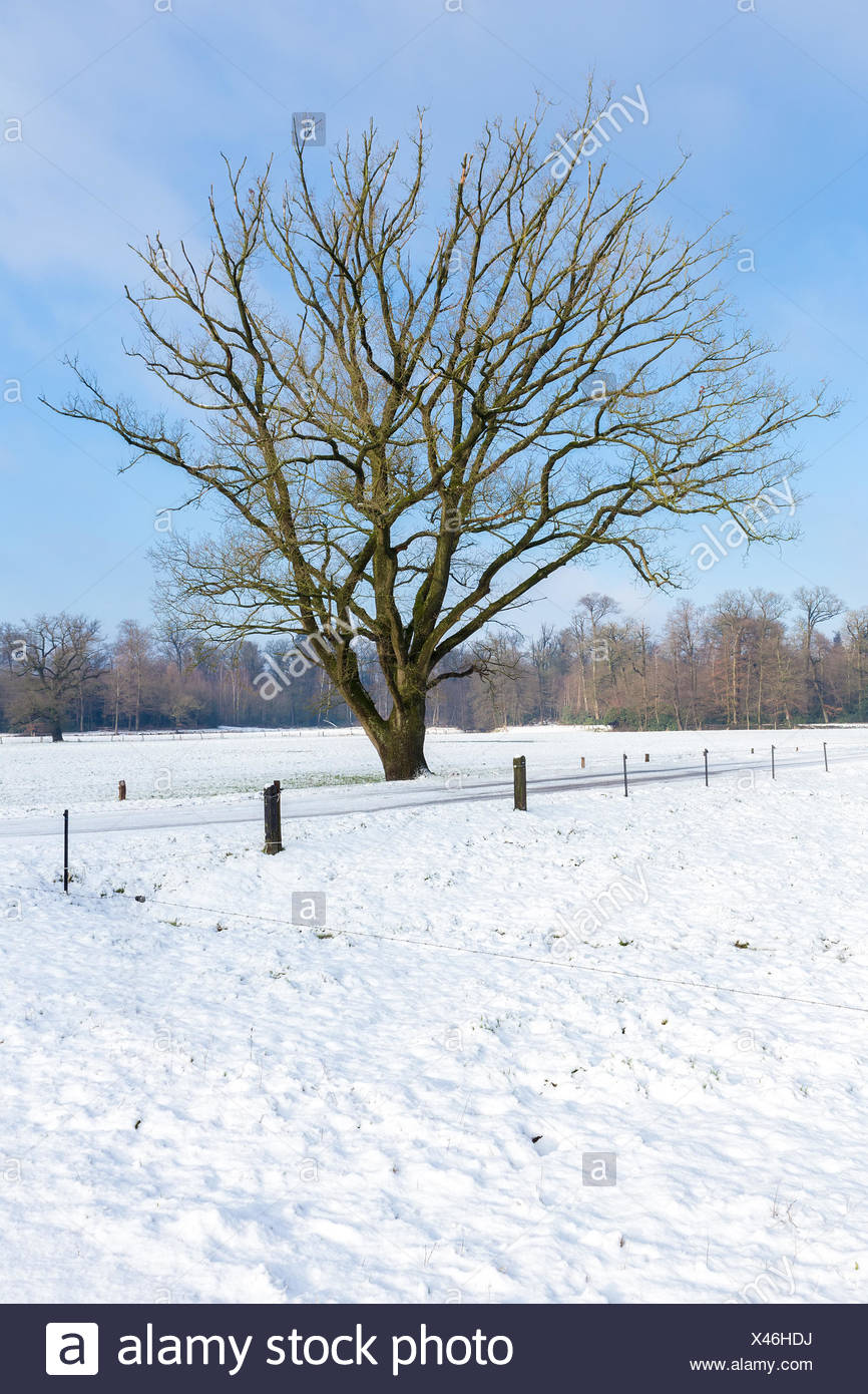 Snowy winter landscape with bare tree and blue sky - Stock Image