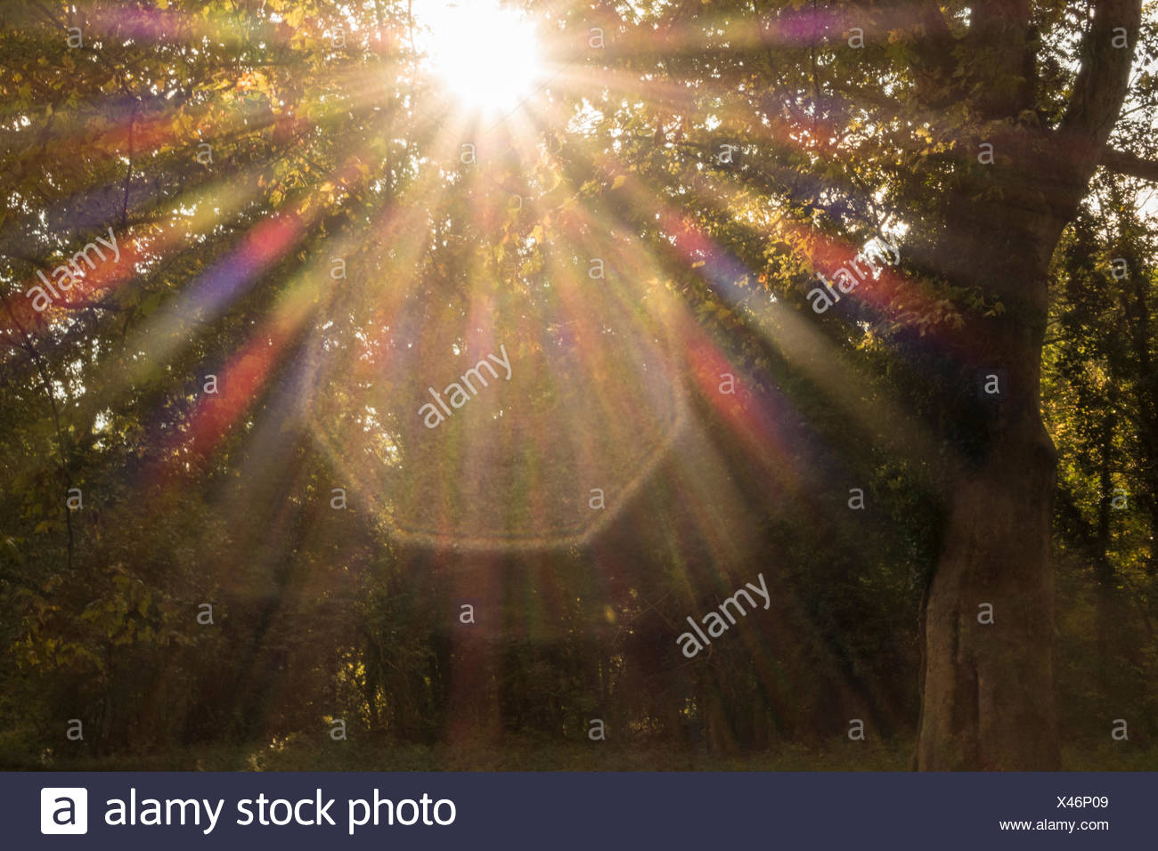 Prismatic colours of sunbeam in a park - Stock Image