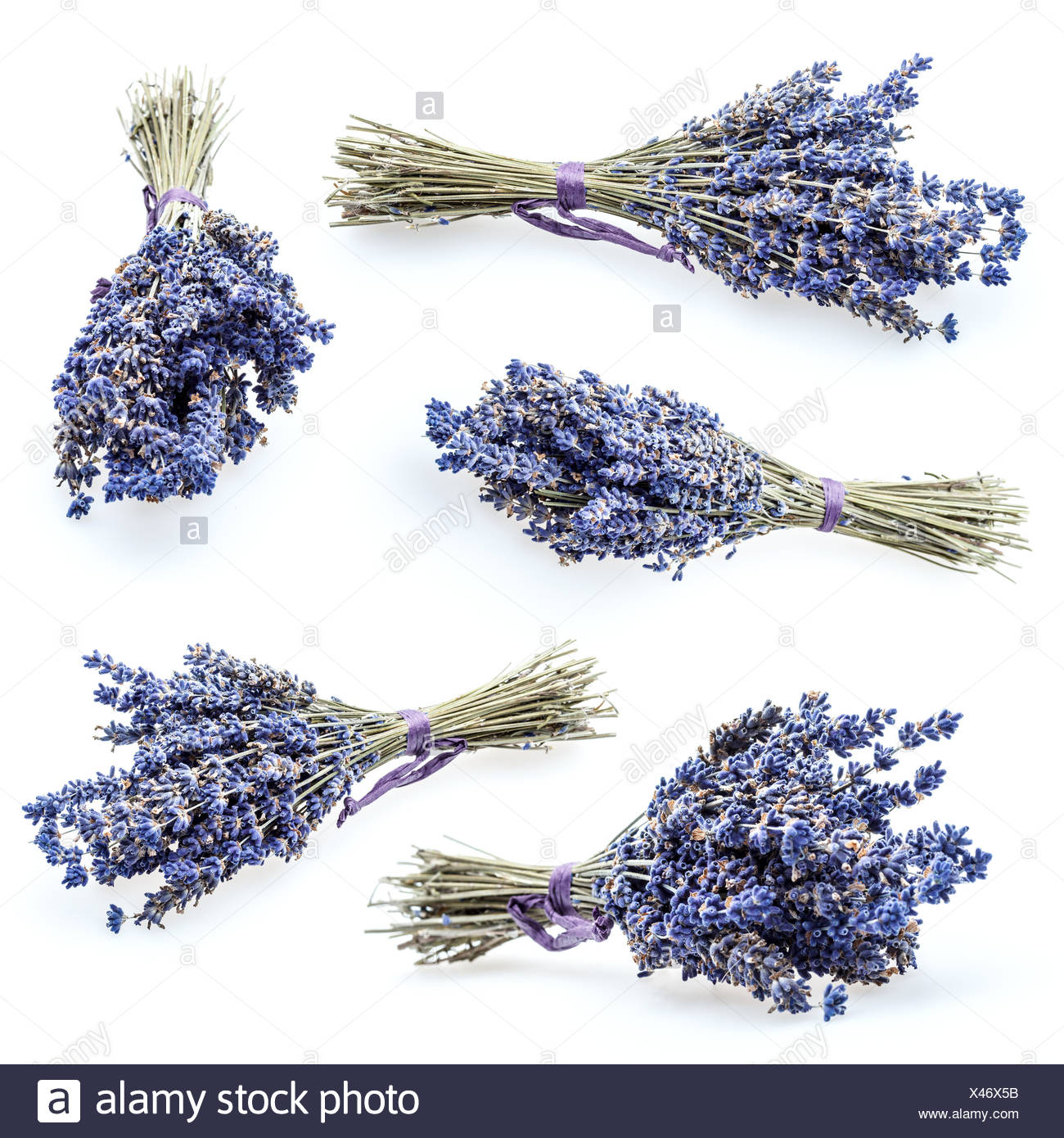 Set of bunch of lavender isolated on white Stock Photo
