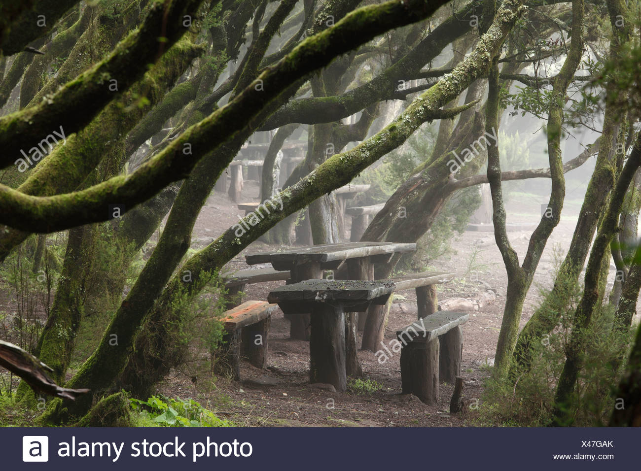 Laguna Grande resting place in a cloud forest, Garajonay National Park, La Gomera, Canary Islands, Spain, Europe - Stock Image