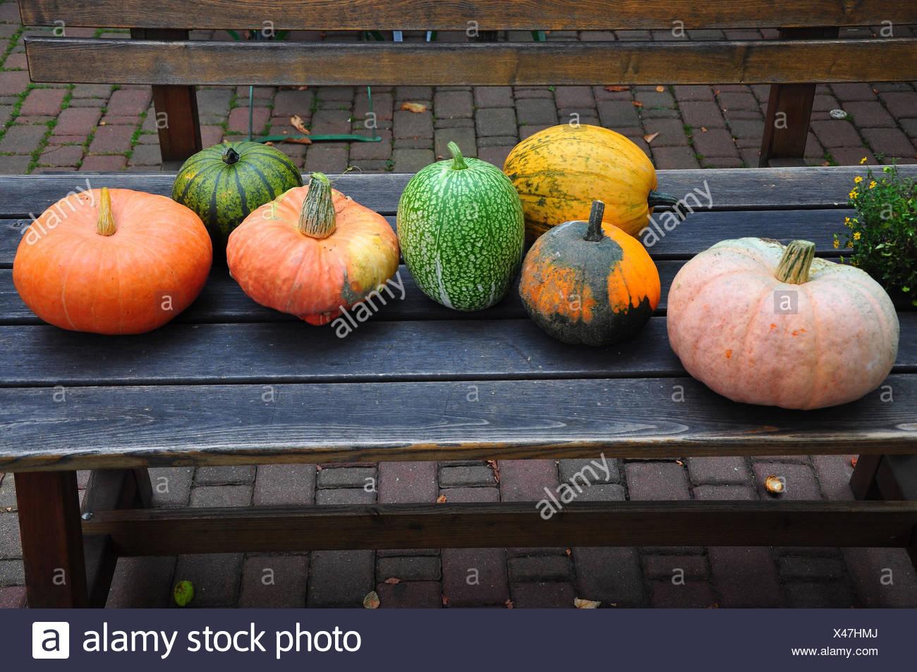 Ornamental pumpkins, wooden table, - Stock Image