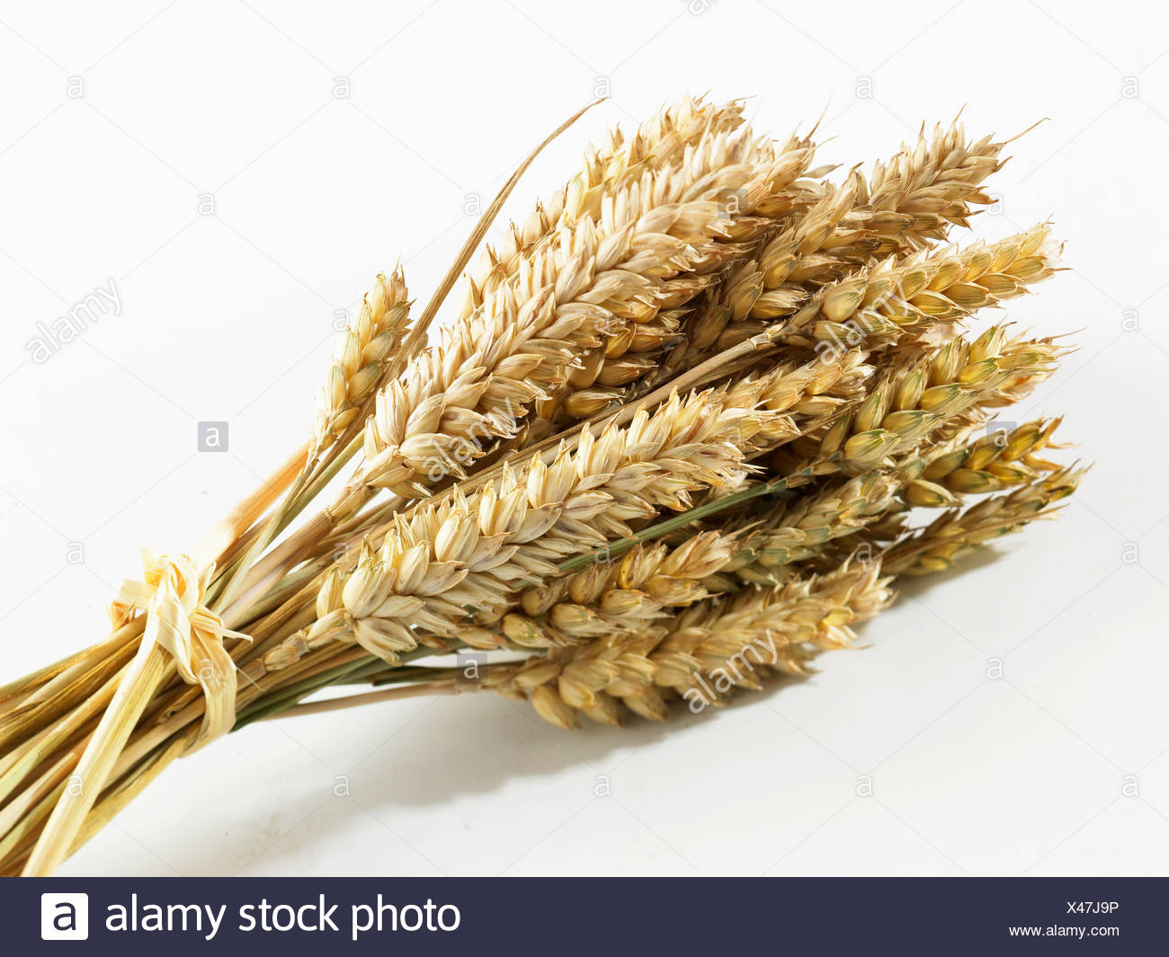 Ears of wheat - Stock Image