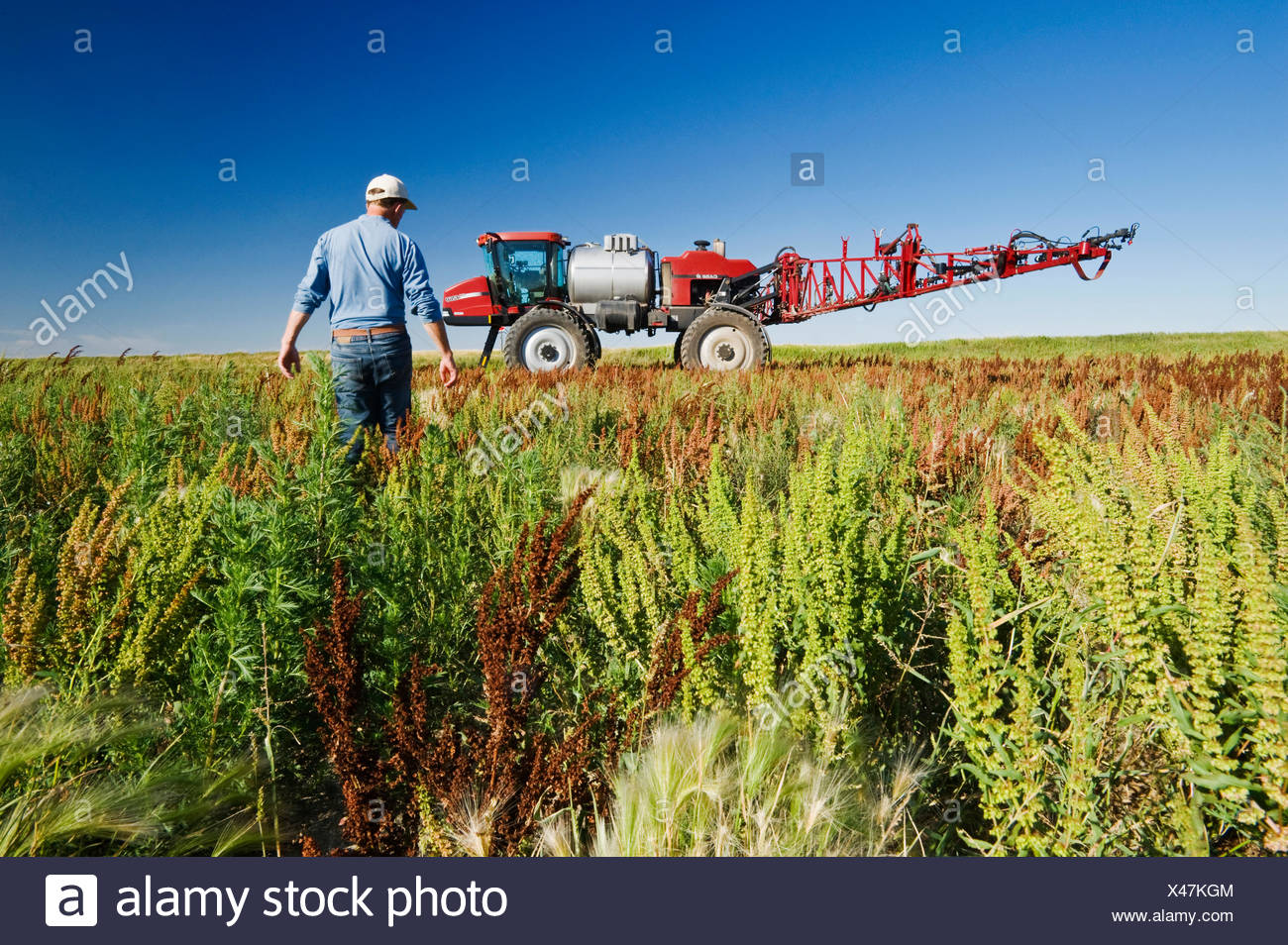 a man scouts weeds in field next to a high clearance sprayer, near Moreland, Saskatchewan, Canada - Stock Image
