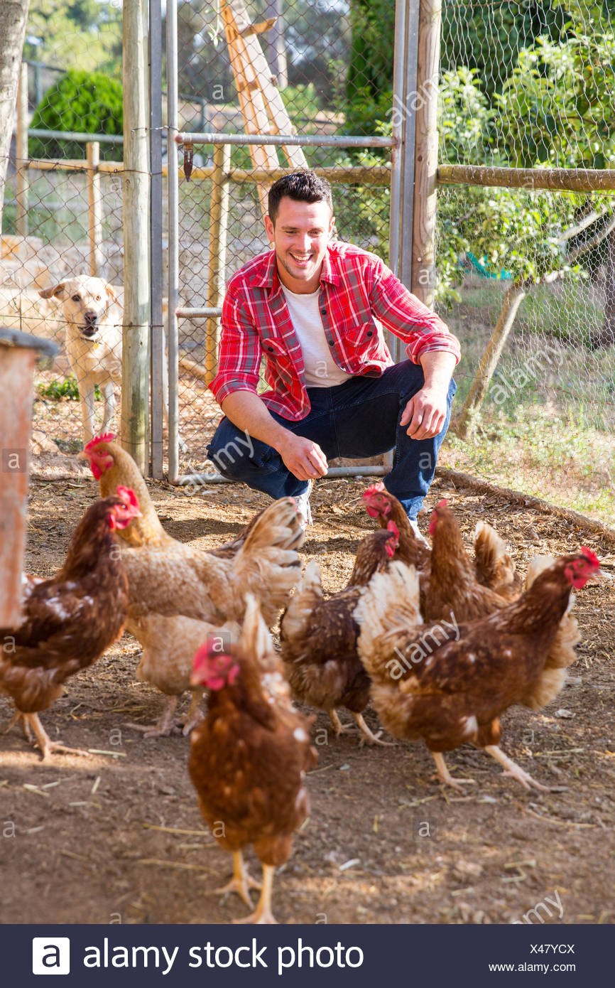 Organic farmer tending free range chickens - Stock Image