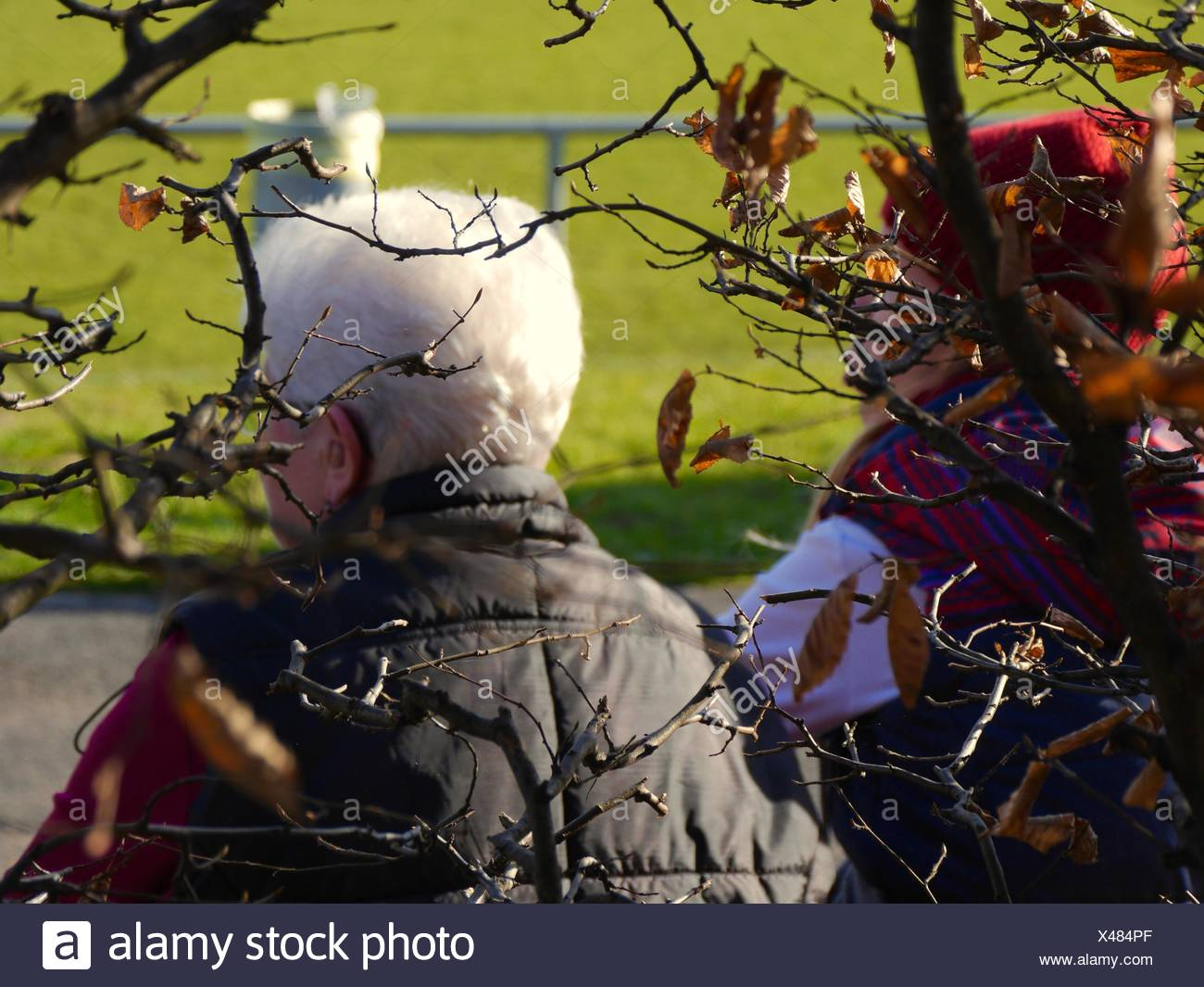 Rea View Of People Sitting At Park By Tree - Stock Image