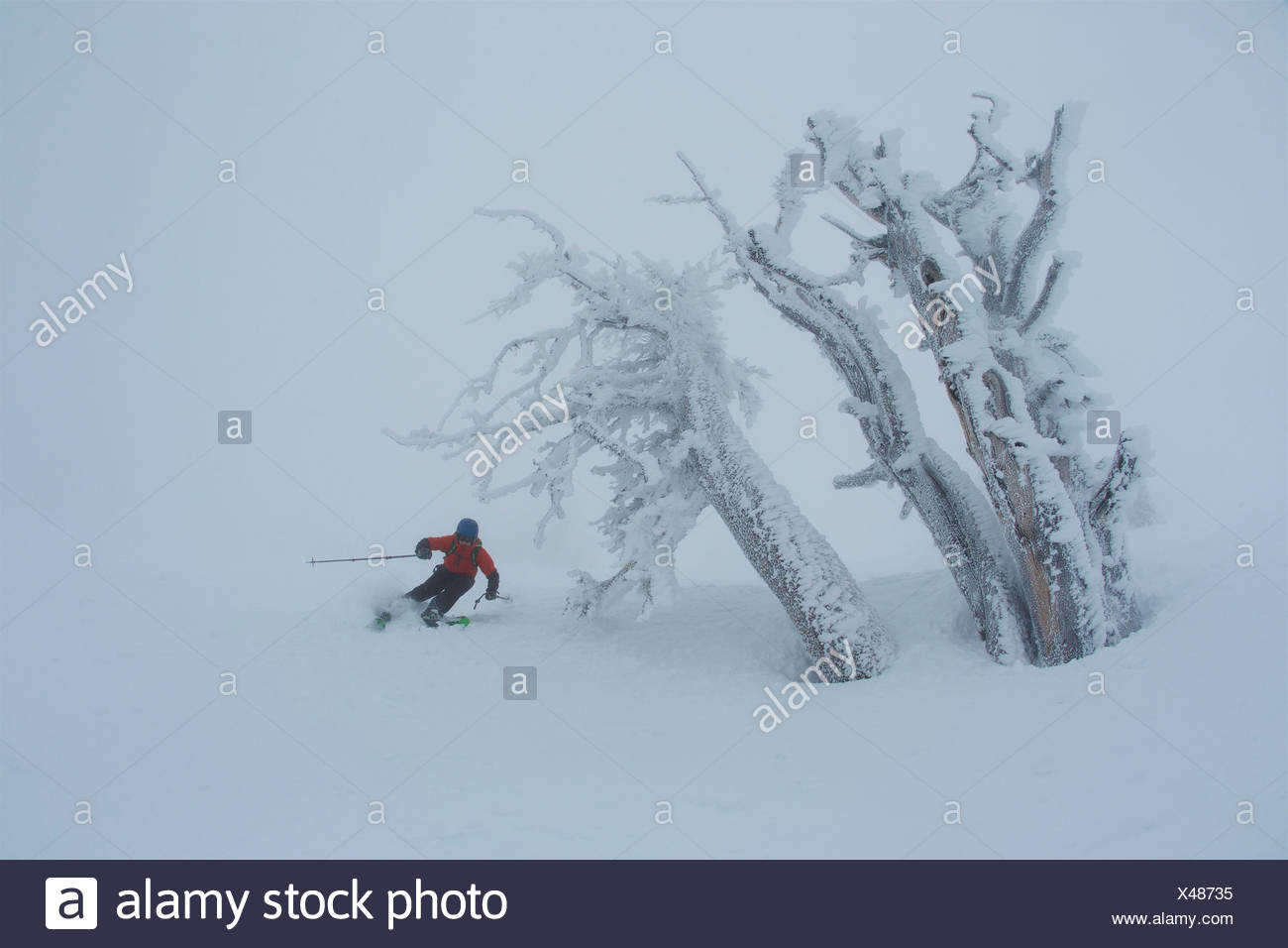 A teen boy skiing in foggy, whiteout conditions near rime covered trees. - Stock Image