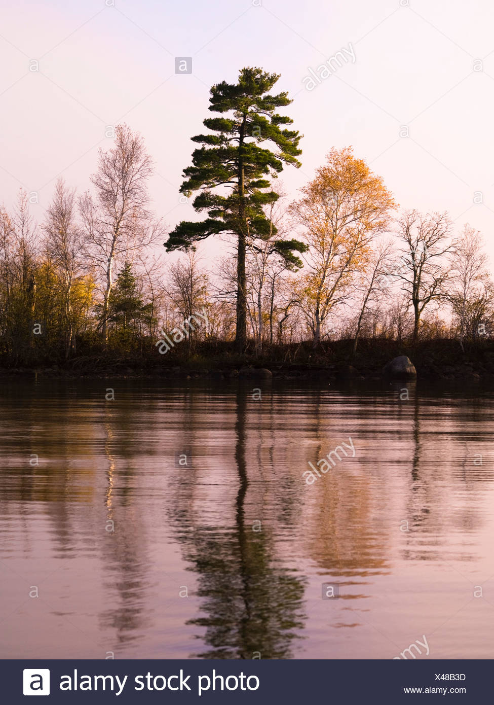 Trees reflected in a lake - Stock Image