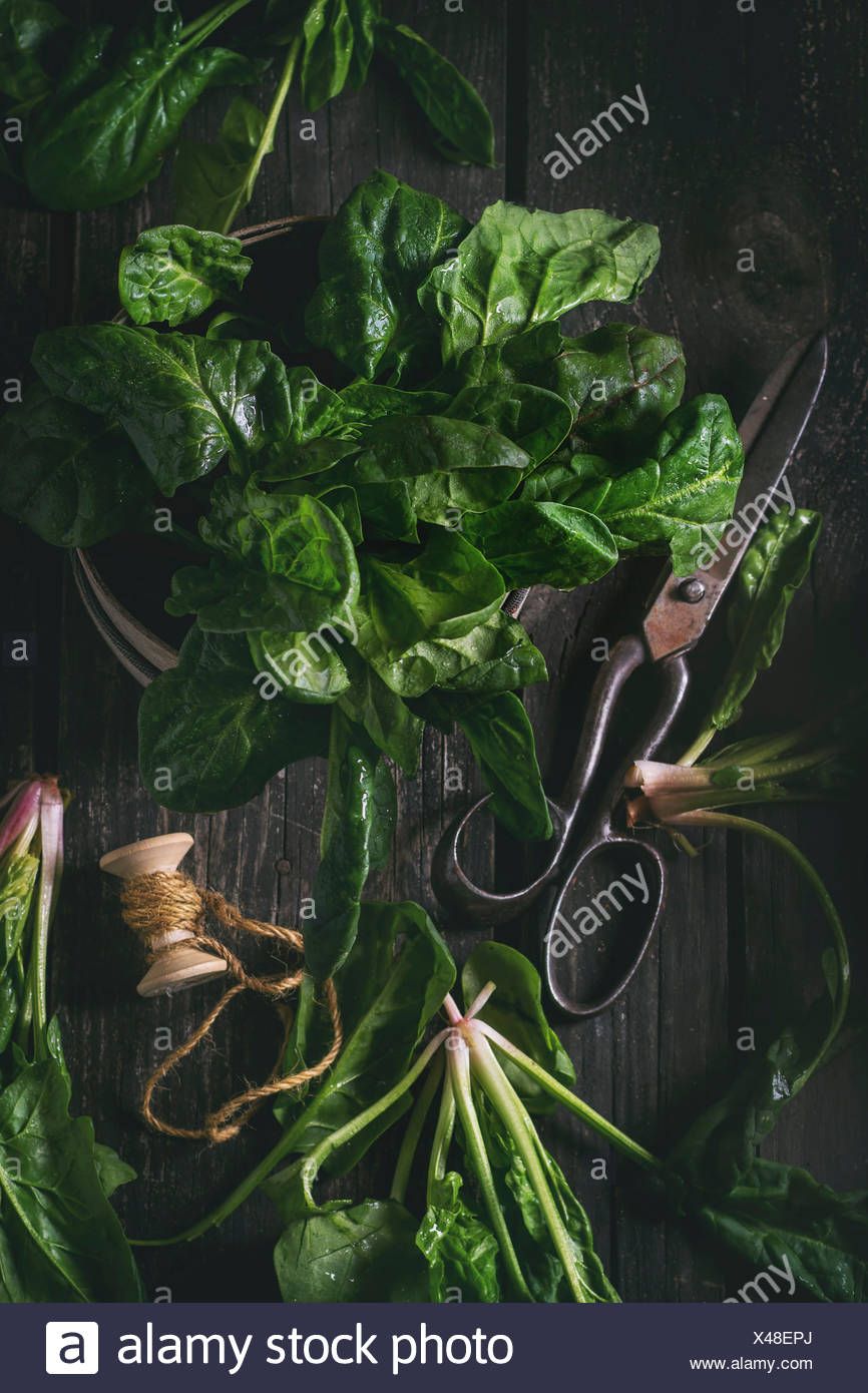Composition with fresh spinach, old scissors and spool of thread over wooden surface. Top view. Dark rustic style with retro fil - Stock Image