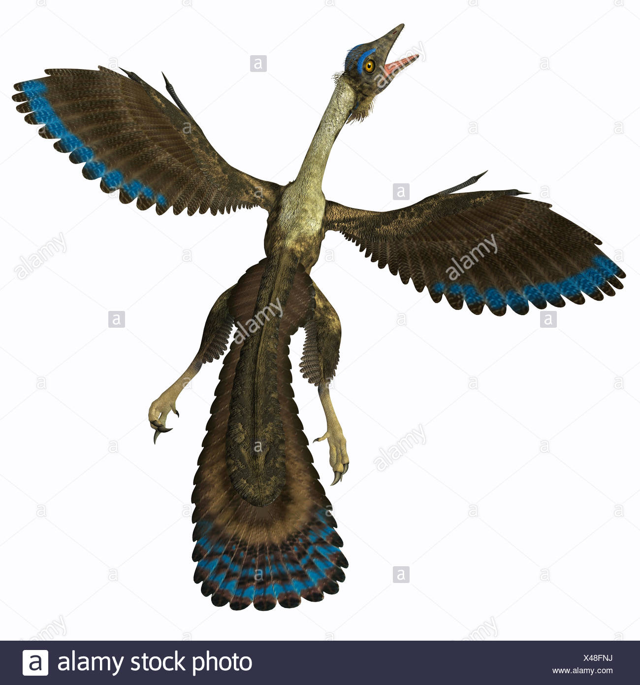 Archaeopteryx on White - Stock Image