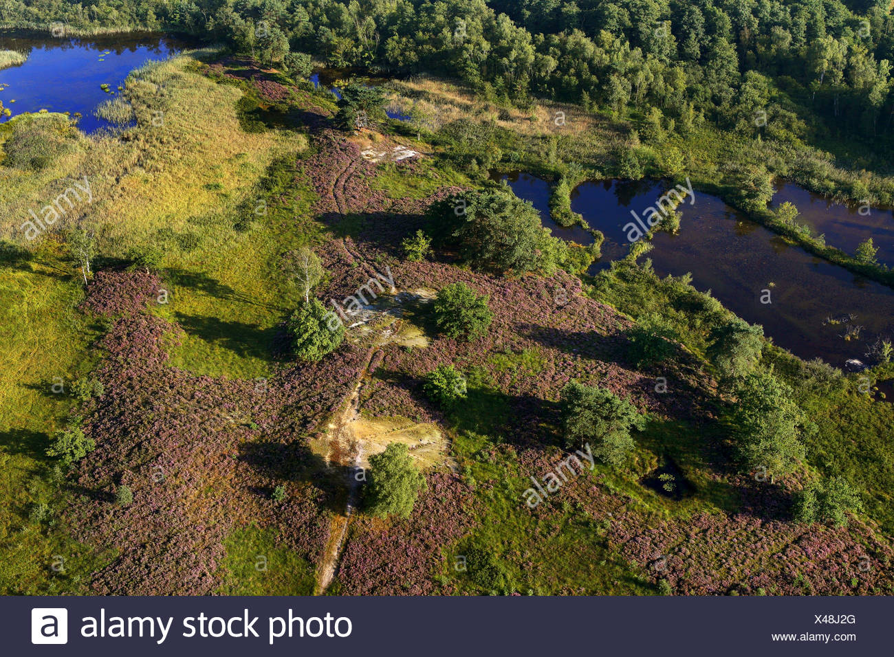 aerial view to heath, Belgium, Limburg, Hoge Kempen National Park - Stock Image