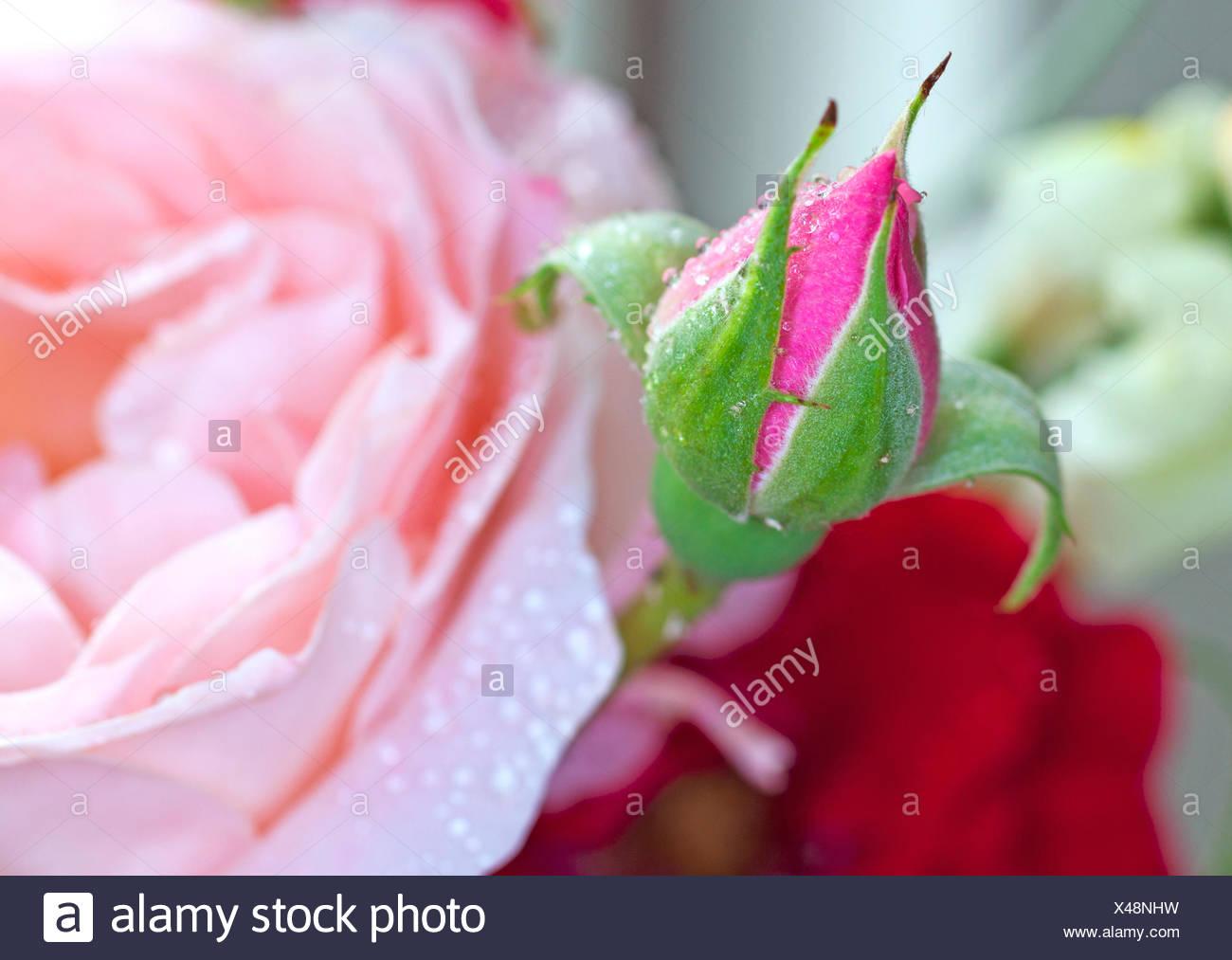 close beautiful beauteously - Stock Image