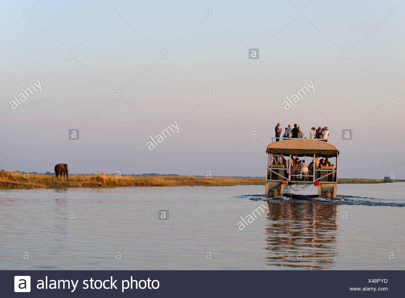 Africa, Botswana, Chobe, National Park, Hippo, Hippopotamus, animal, safari, water, river, horizontal, wildlife, boat, tourist, - Stock Image