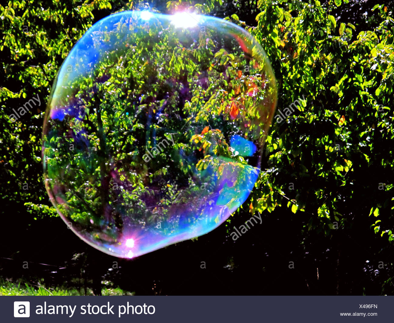 Soap bubble, bubble, reflection, bushes, thicket, sunrays, reflection, float Stock Photo