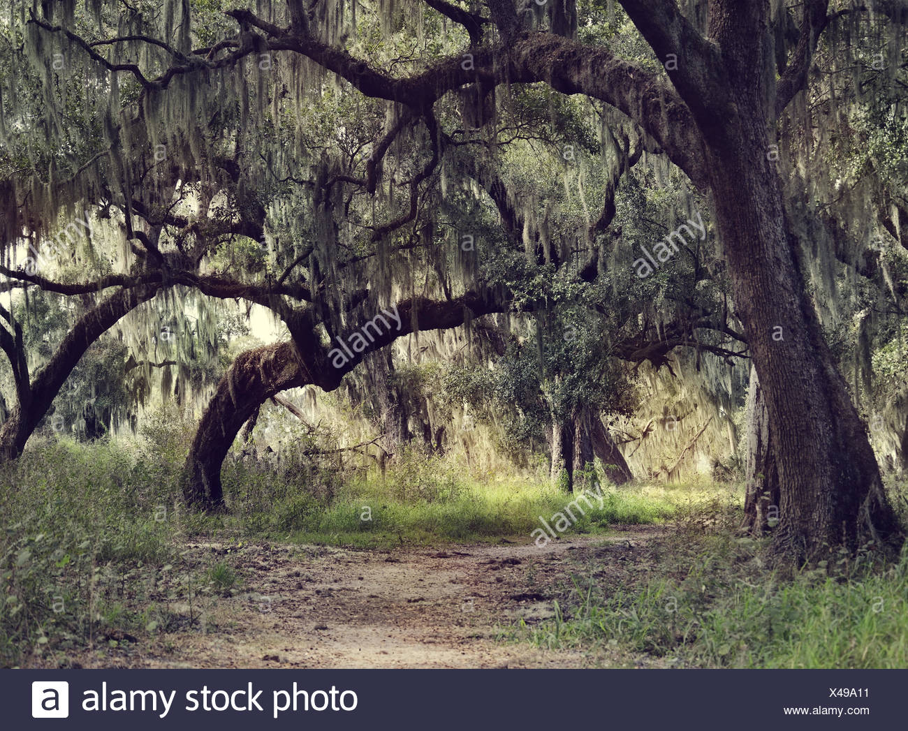 Oak Trees Spanish Moss High Resolution Stock Photography And Images Alamy