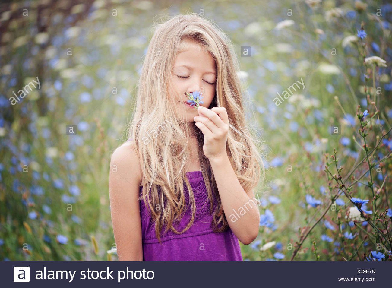 Portrait of young girl smelling flower (6-7) in chicory field - Stock Image
