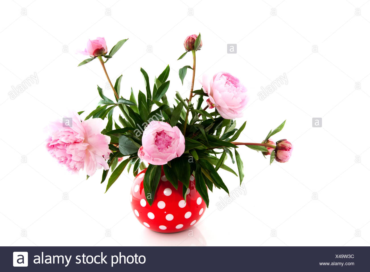 Bouquet With Common Peony Stock Photos & Bouquet With Common Peony ...