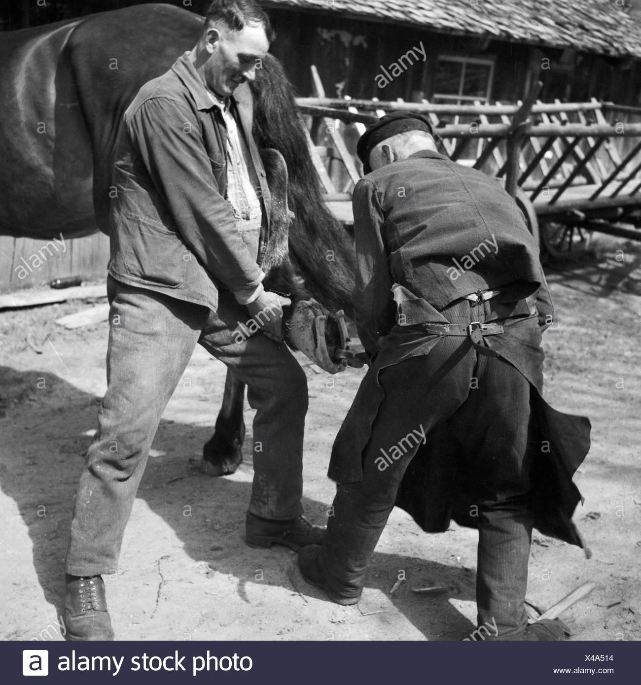 Ein Hufschmied bestückt ein Pferd mit neuen Hufeisen, Deutschland 1930er Jahre. A blacksmith putting new horseshoes on a horse, Germany 1930s. - Stock Image