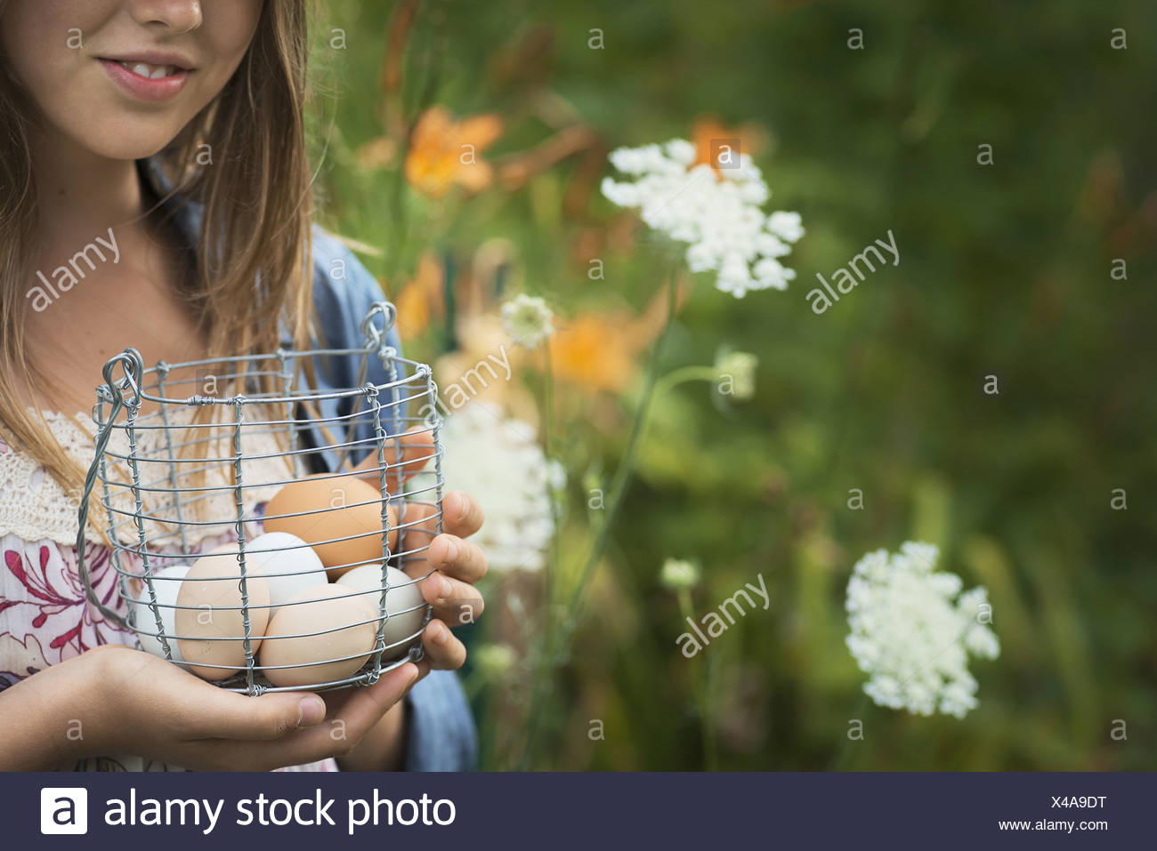 New York state USA person holding basket freshly laid hen's eggs - Stock Image