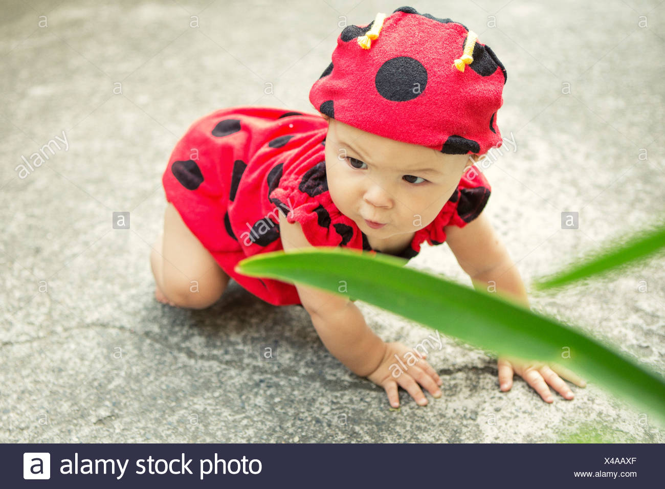 Baby girl wearing ladybird outfit - Stock Image