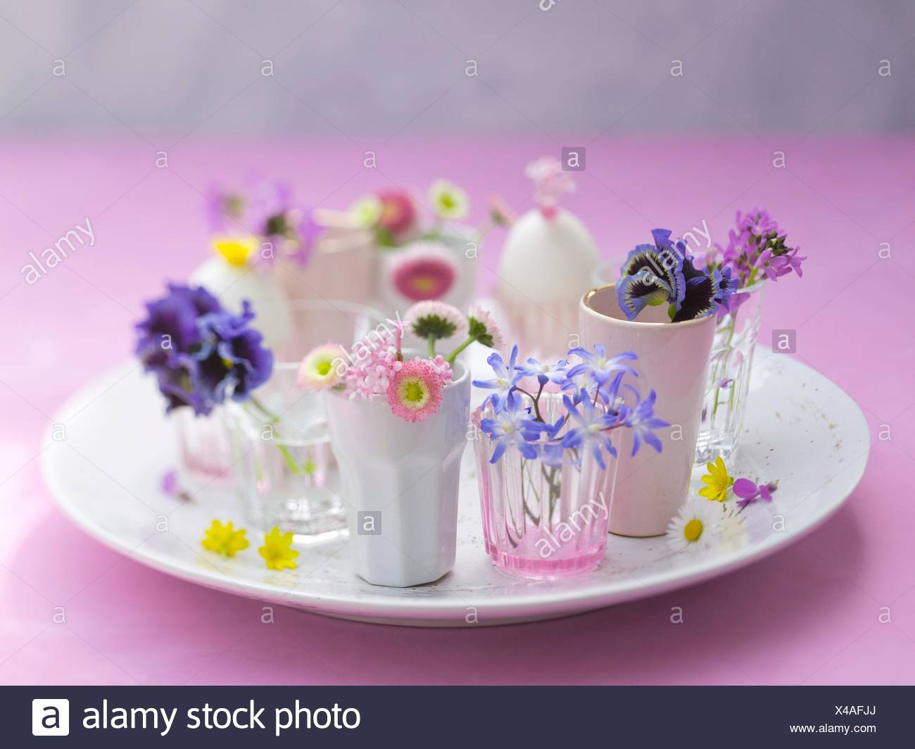 Alamy & cups with flowers on stoneware plate flower heads fresh spring ...