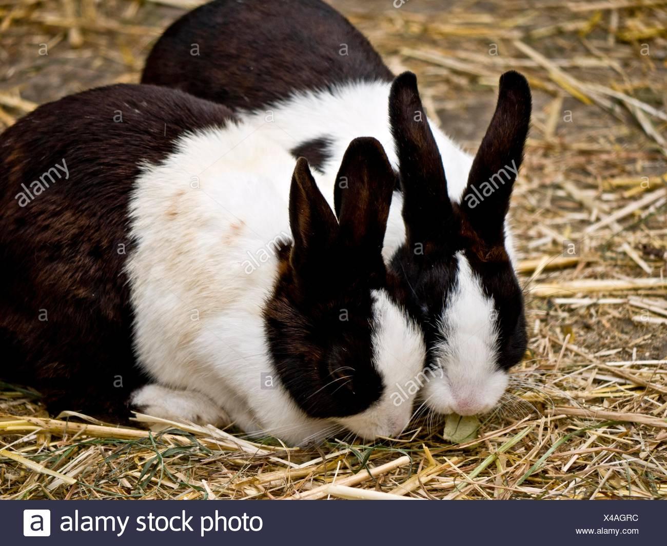 mammals Stock Photo