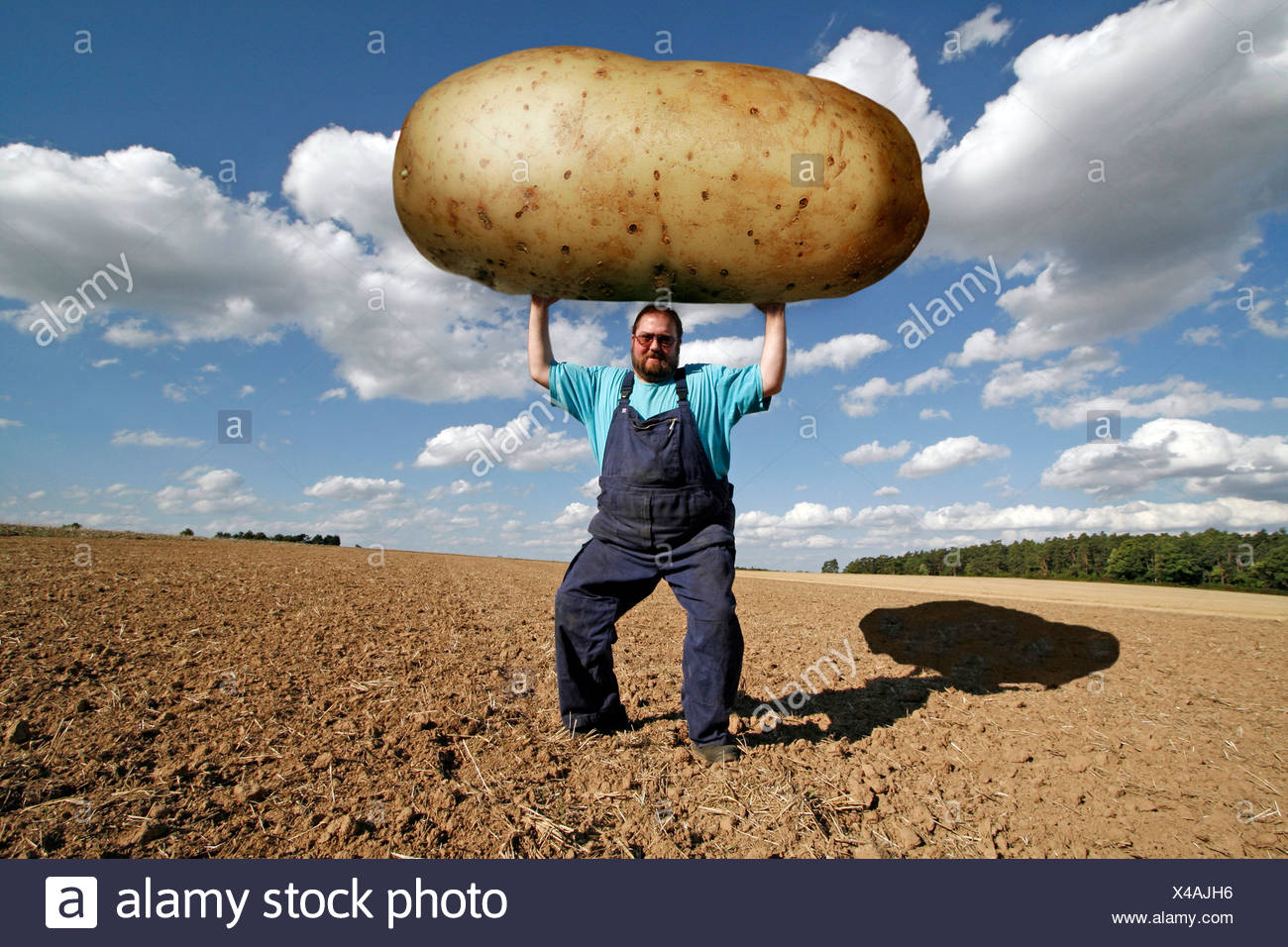 Farmer holding an oversized potato, genetically modified food - Stock Image