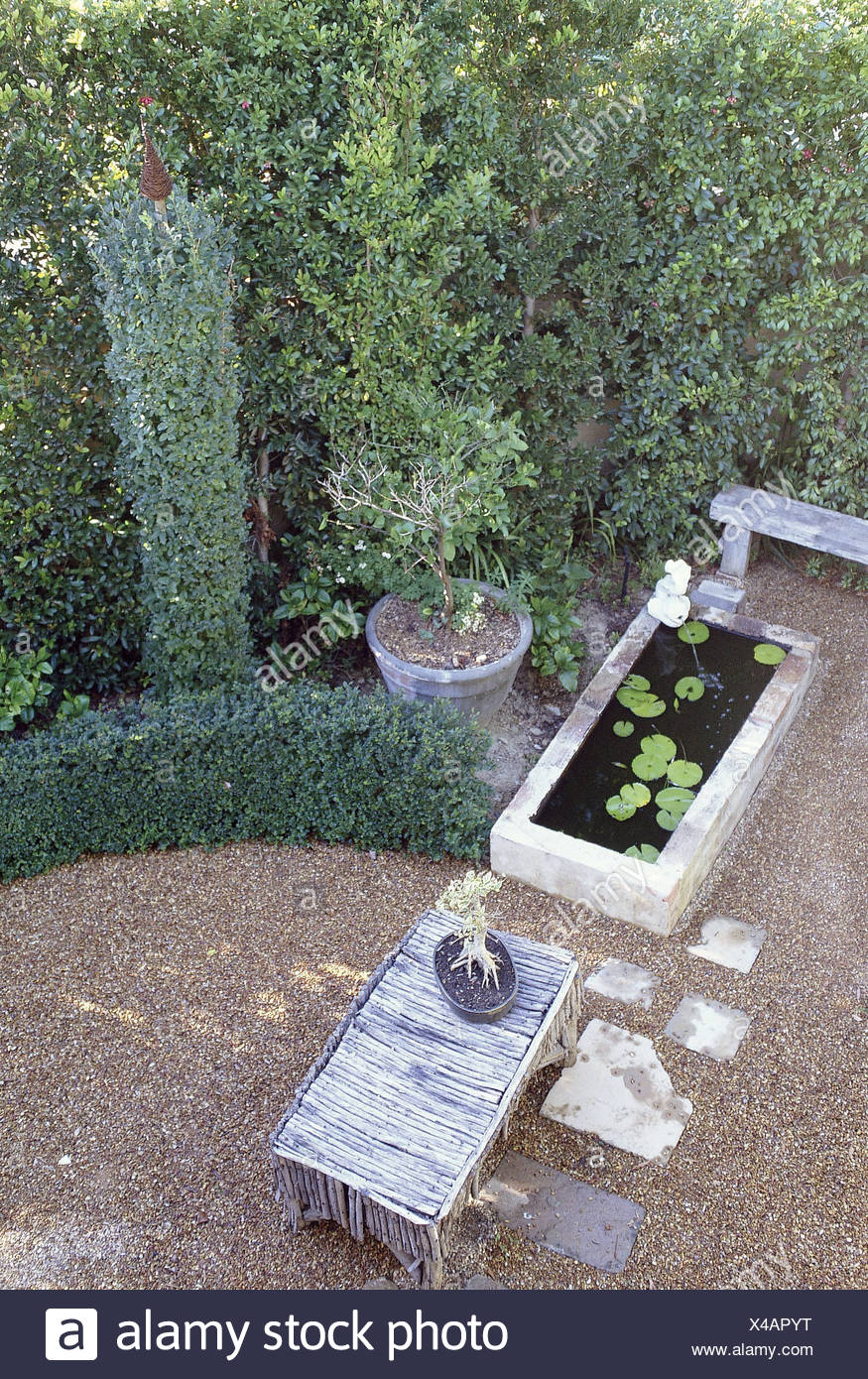 Small Gardens Hedge lined garden curved trimmed privet hedge and hedge trimmed in tall column round edge of gravel area paving - Stock Image