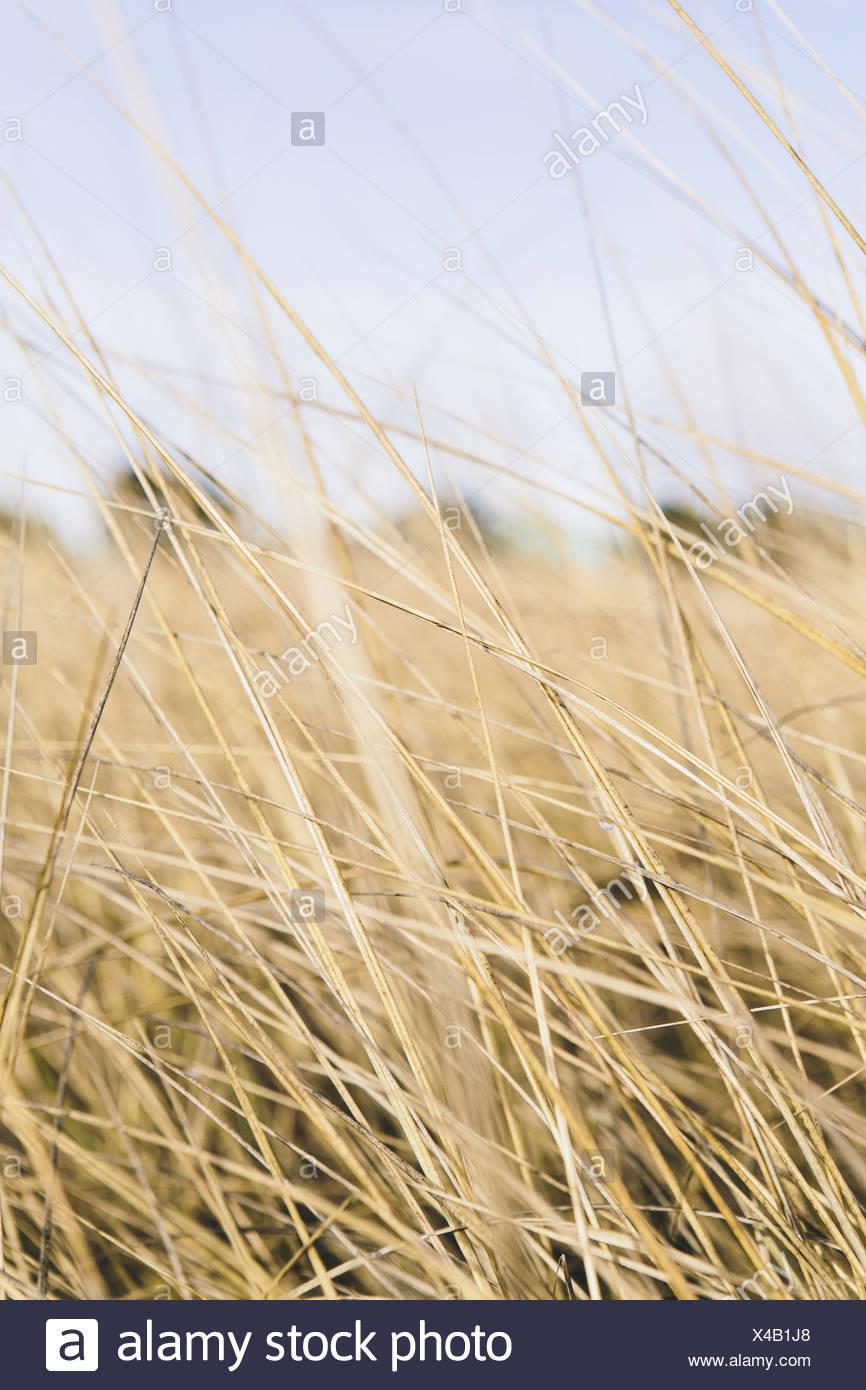 Field of coastal sea grasses Ocean Park - Stock Image