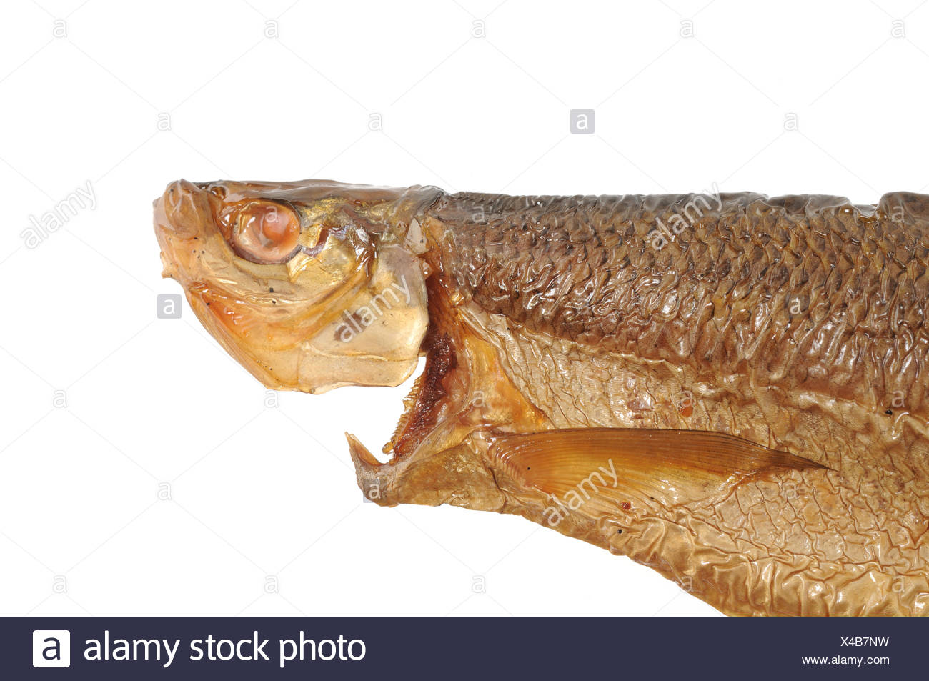 Chiemseerenke / Whitefish - Stock Image