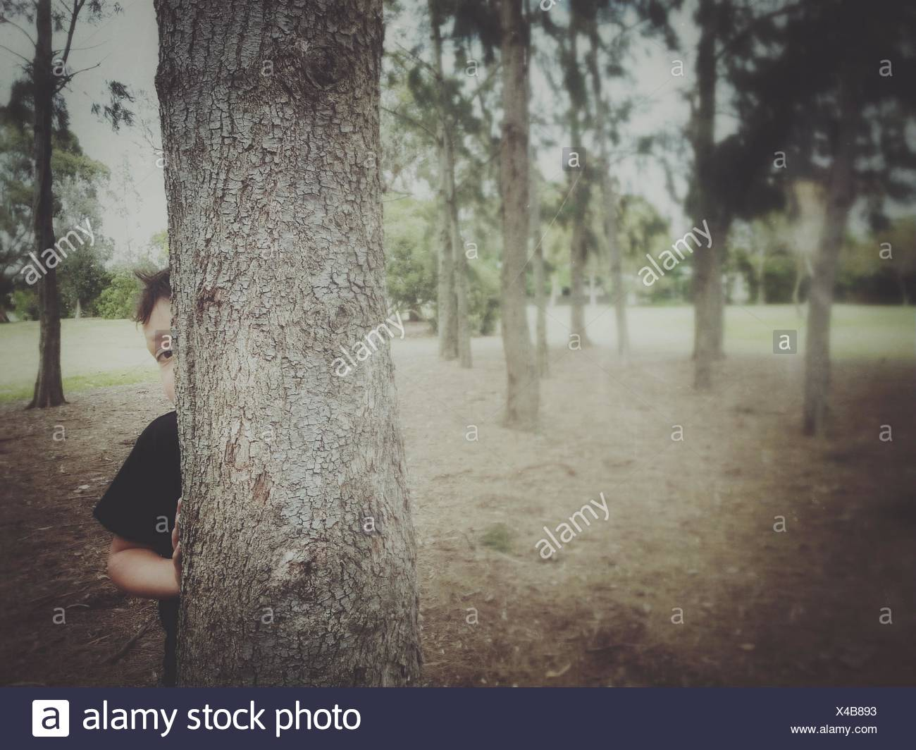Boy hiding behind a tree - Stock Image