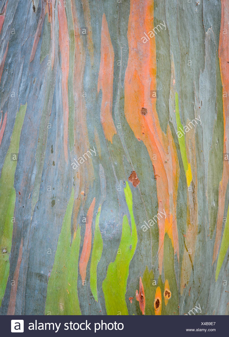tree green - Stock Image