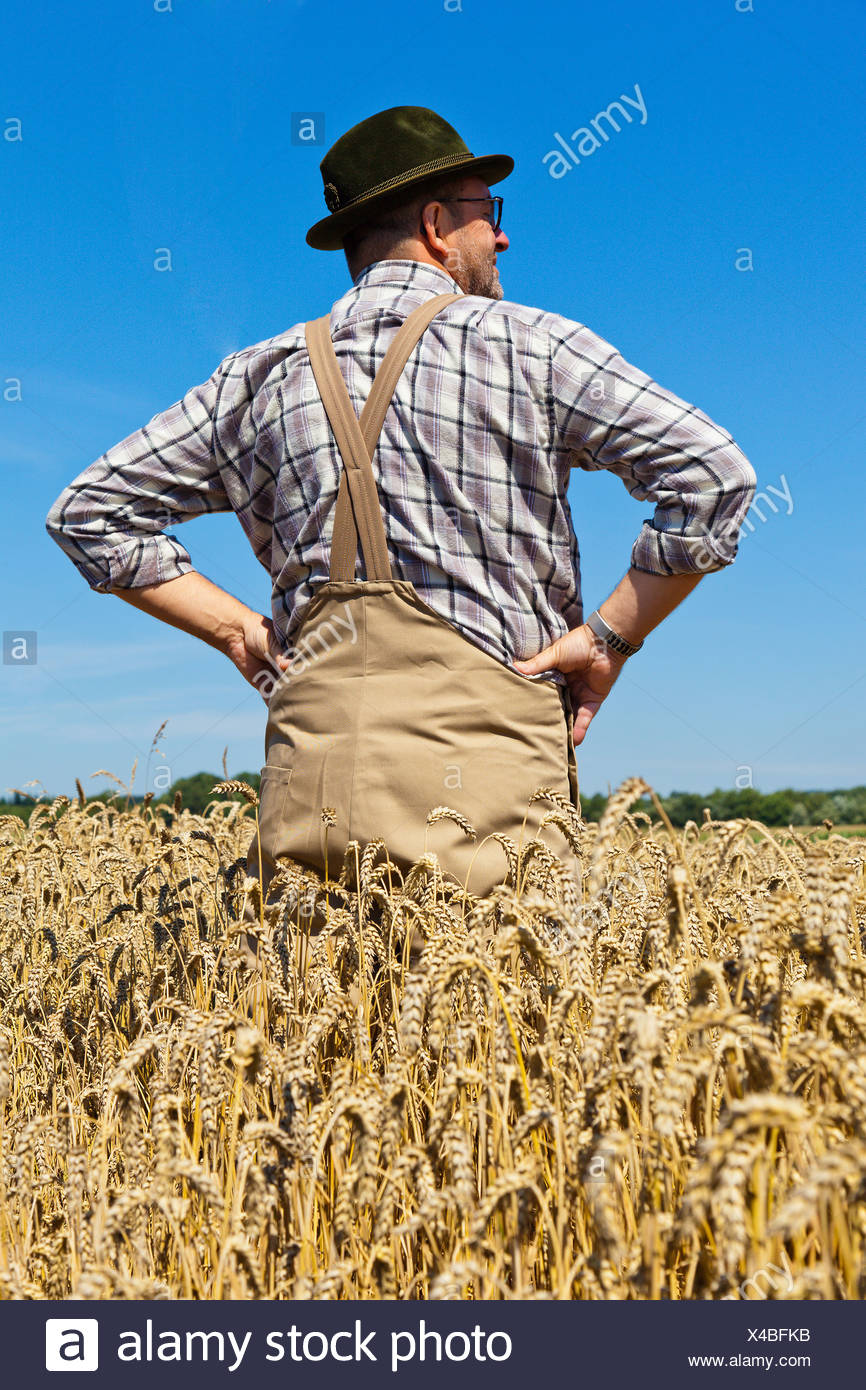 bread wheat, cultivated wheat (Triticum aestivum), content  farmer standing in his mature wheat with the arms akimbo, Germany - Stock Image