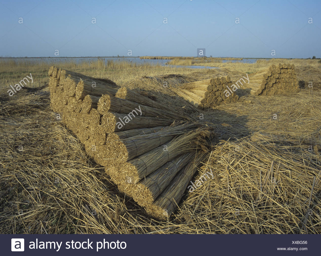 Austria, Burgenland, new colonist lake, reed, tract, - Stock Image