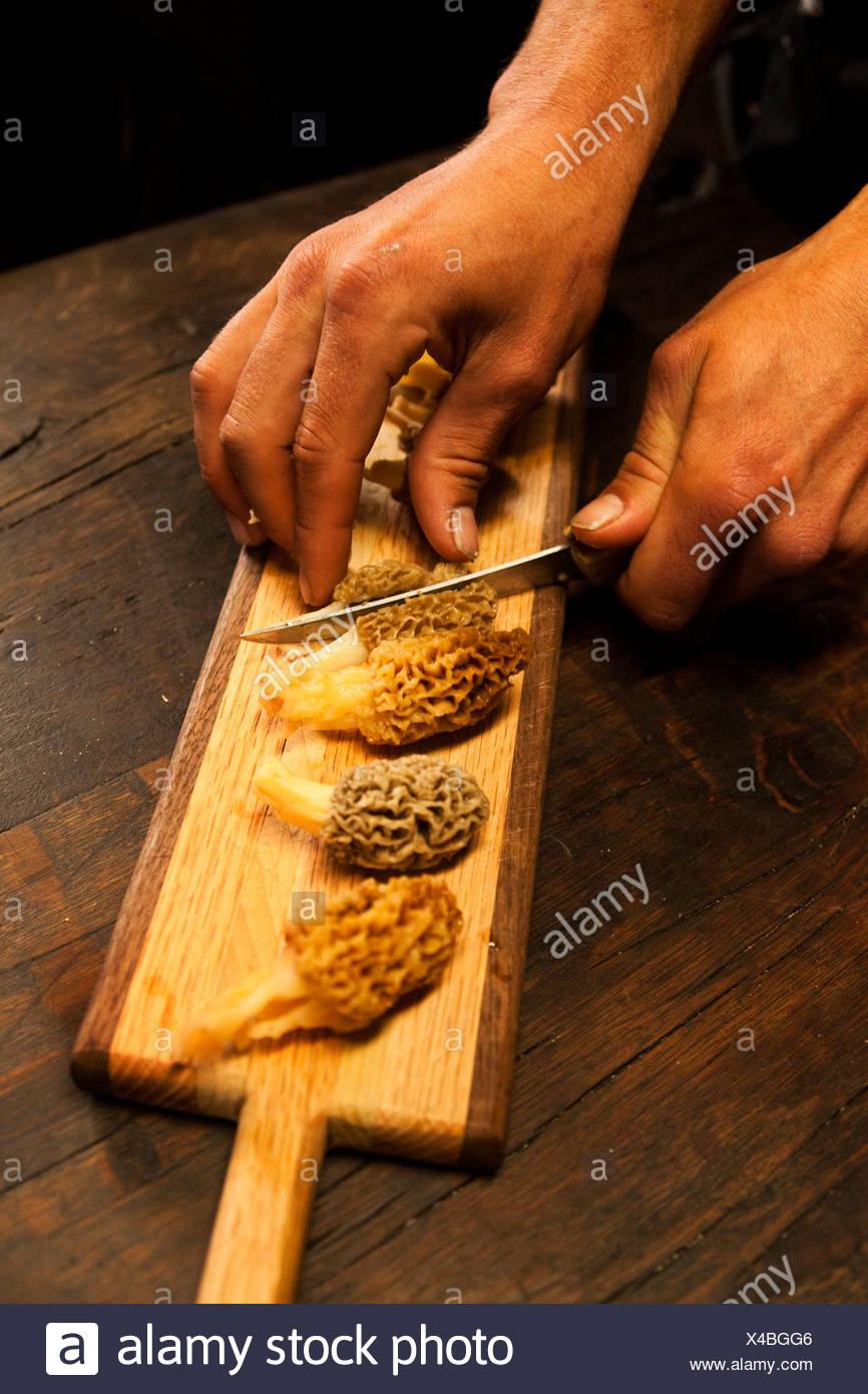 Freshly picked morel mushrooms are sliced in half in Montana. - Stock Image